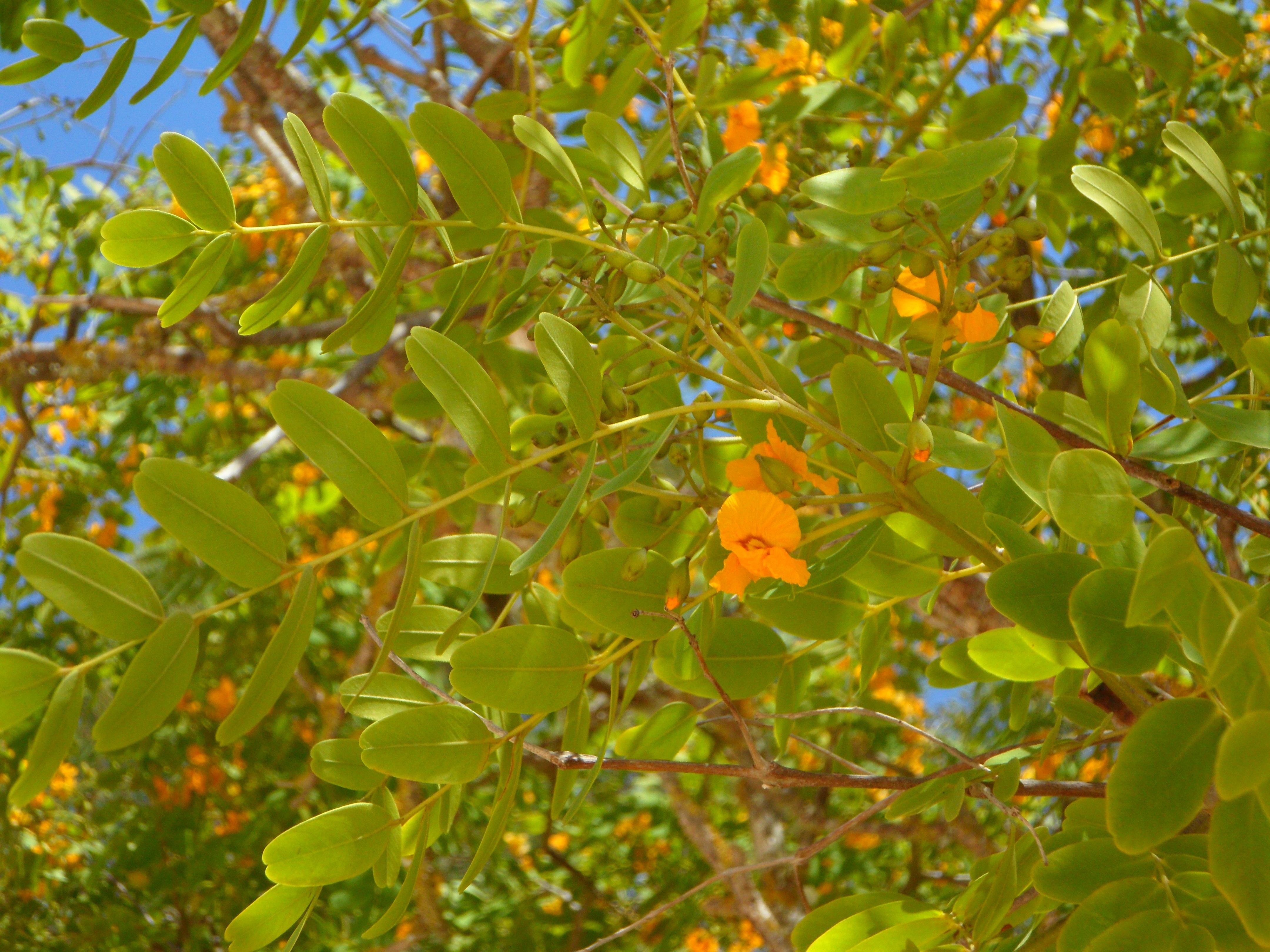 Images Gratuites Arbre Branche Fruit Lumiere Du Soleil Feuille