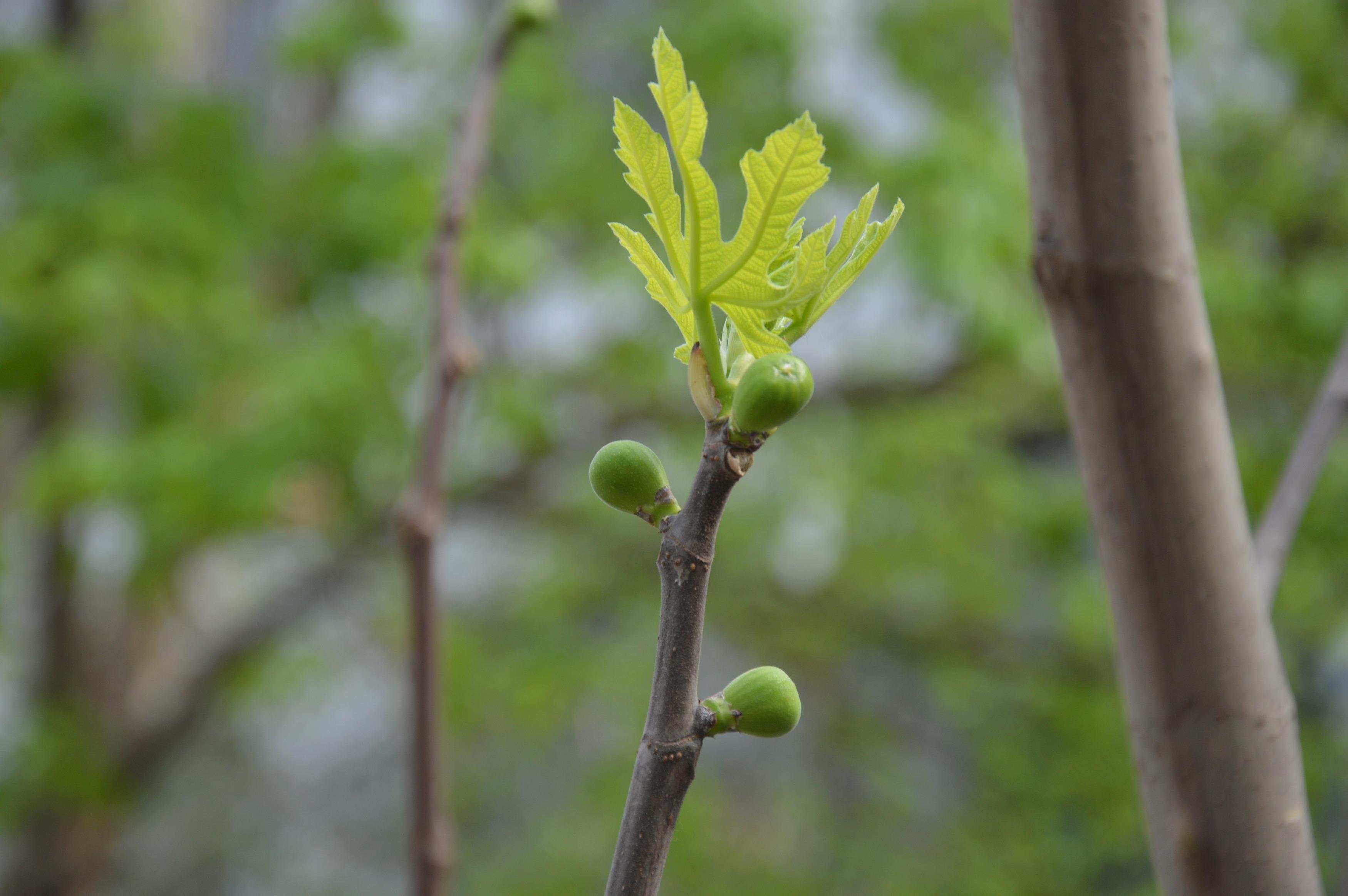 Images gratuites arbre branche fleur feuille for Plante ligneuse