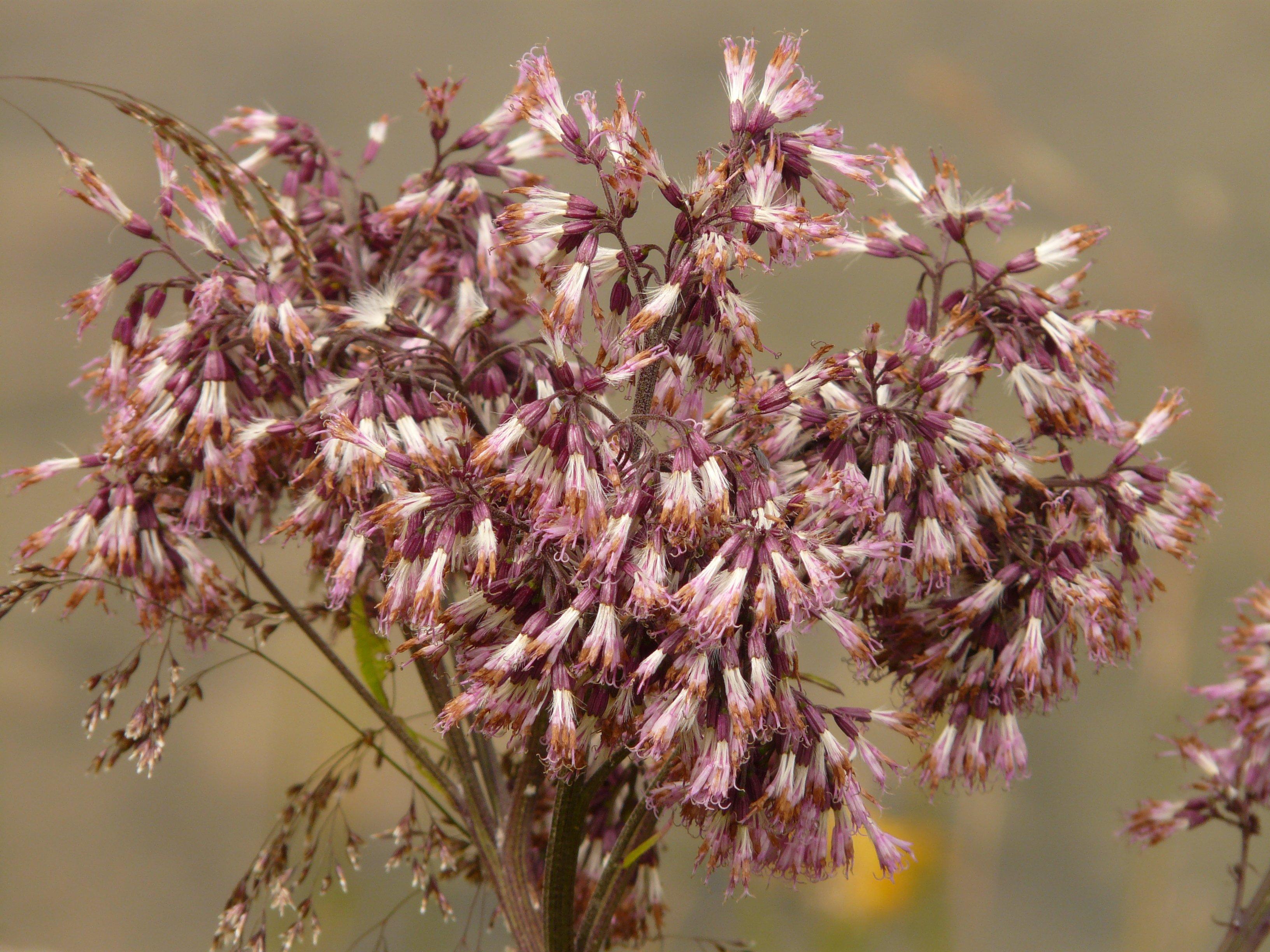 banco de imagens rvore ramo flor plantar folha flor ptala primavera erva produzir botnica flora galho flores silvestres arbusto