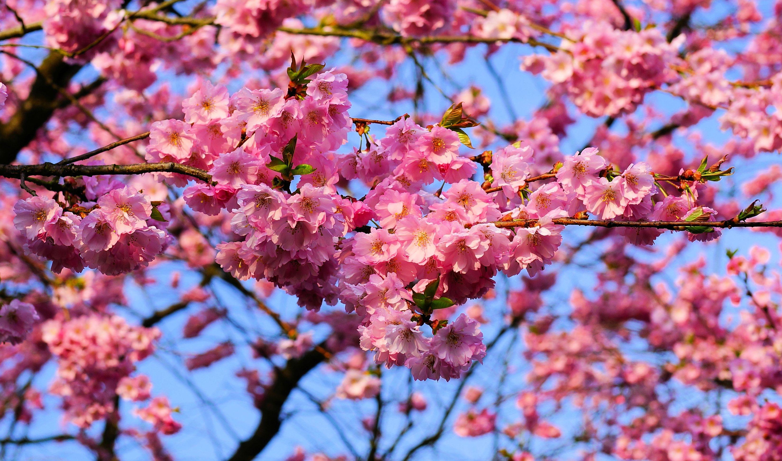 Free Images Tree Branch Leaf Flower Petal Bloom Spring