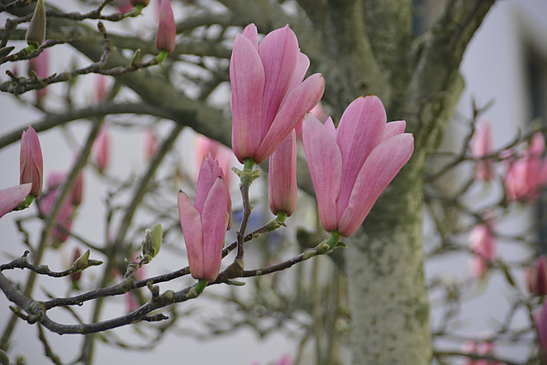 gratis afbeeldingen   boom  tak  bloesem  fabriek  blad