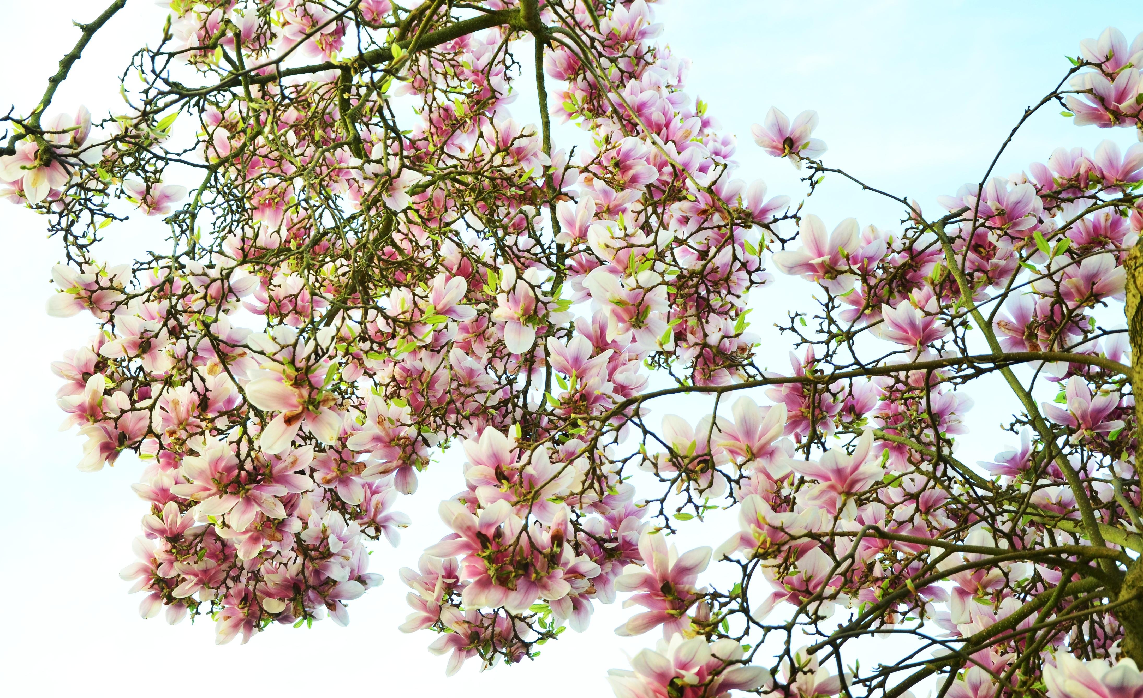 Free Images Branch Leaf Flower Petal Spring Produce Botany