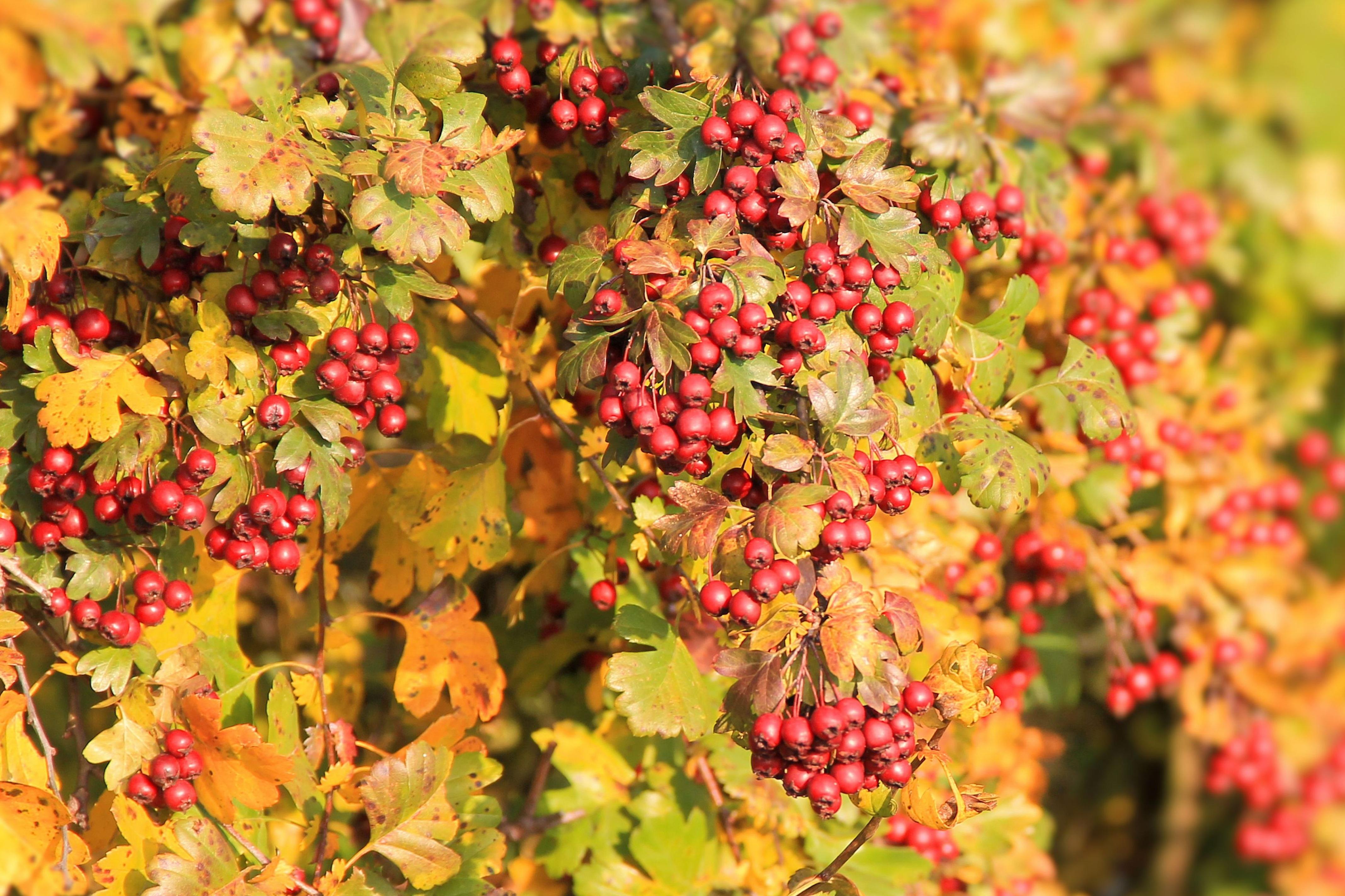 Images gratuites arbre branche fleur feuille - Image feuille automne ...