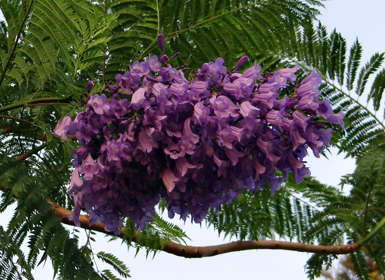 Fotos gratis rbol rama flor hoja produce hojas for Plantas de hojas perennes para jardin
