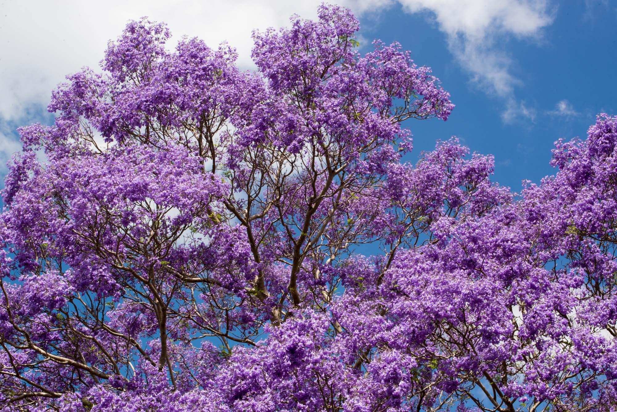 Free Images Tree Branch Sky Flower Summer Spring Botany