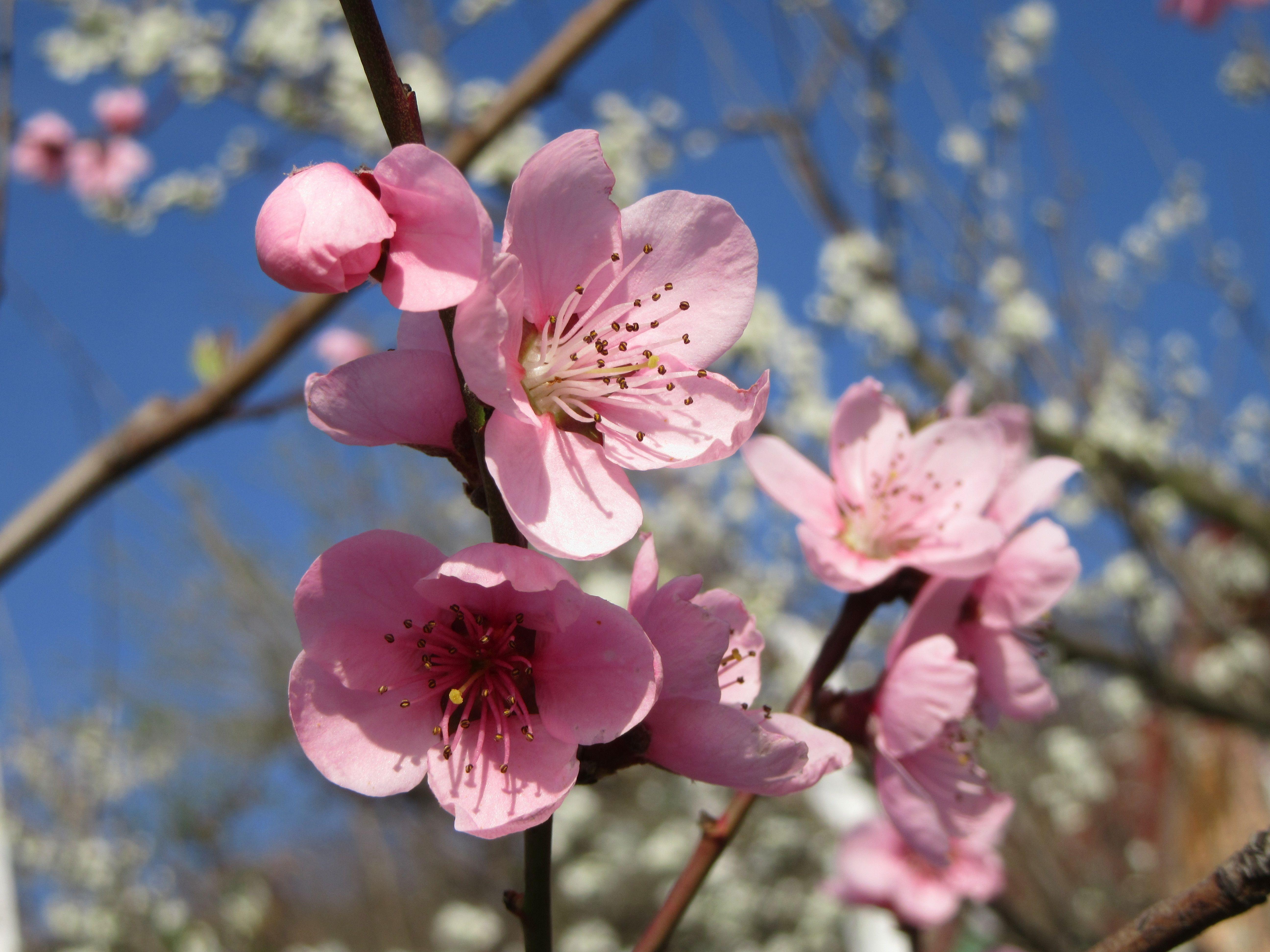 Free Images : sky, fruit, flower, petal, bloom, food ...