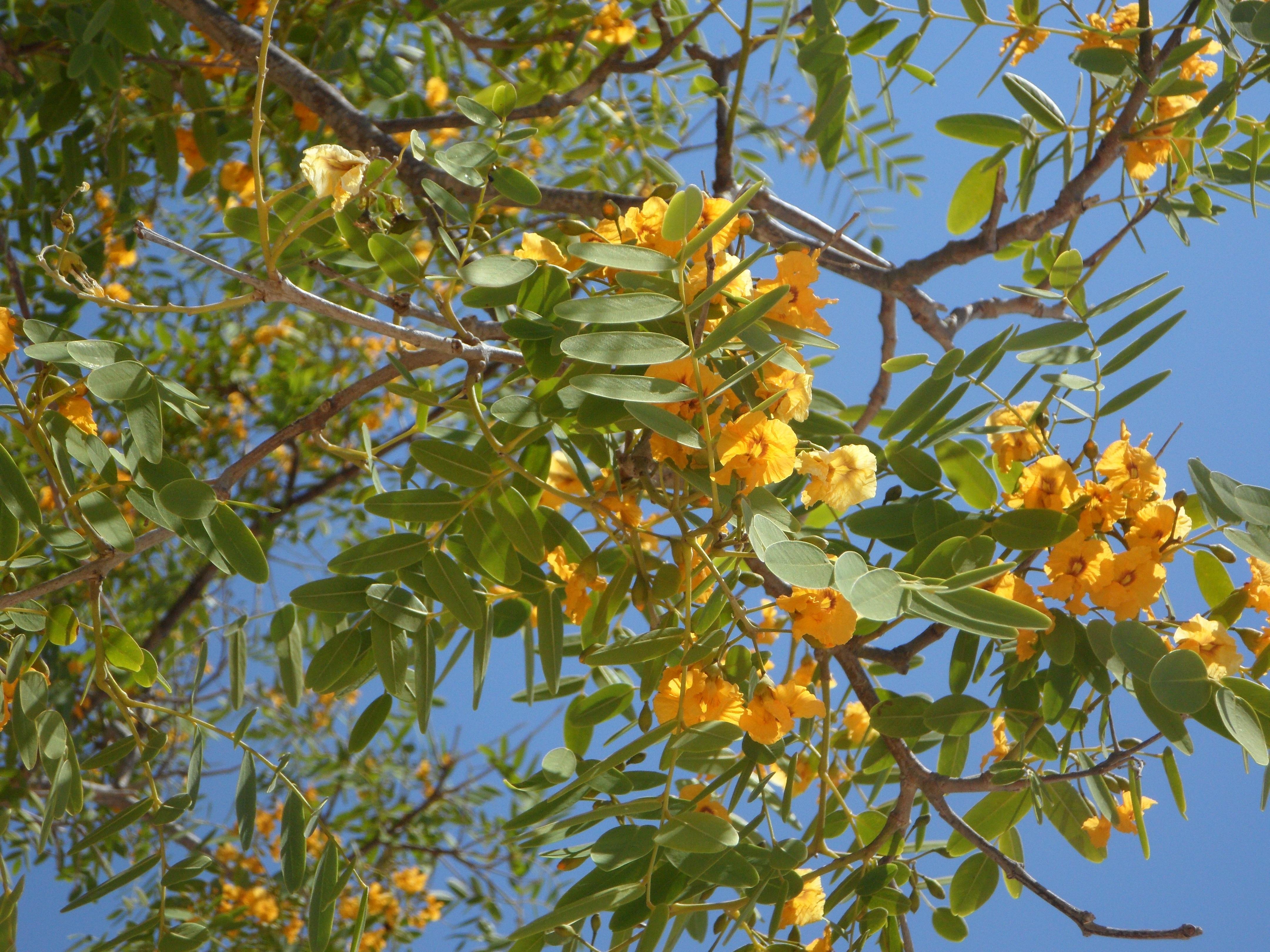 images gratuites arbre branche fleur ciel fruit lumi re du soleil feuille floraison. Black Bedroom Furniture Sets. Home Design Ideas