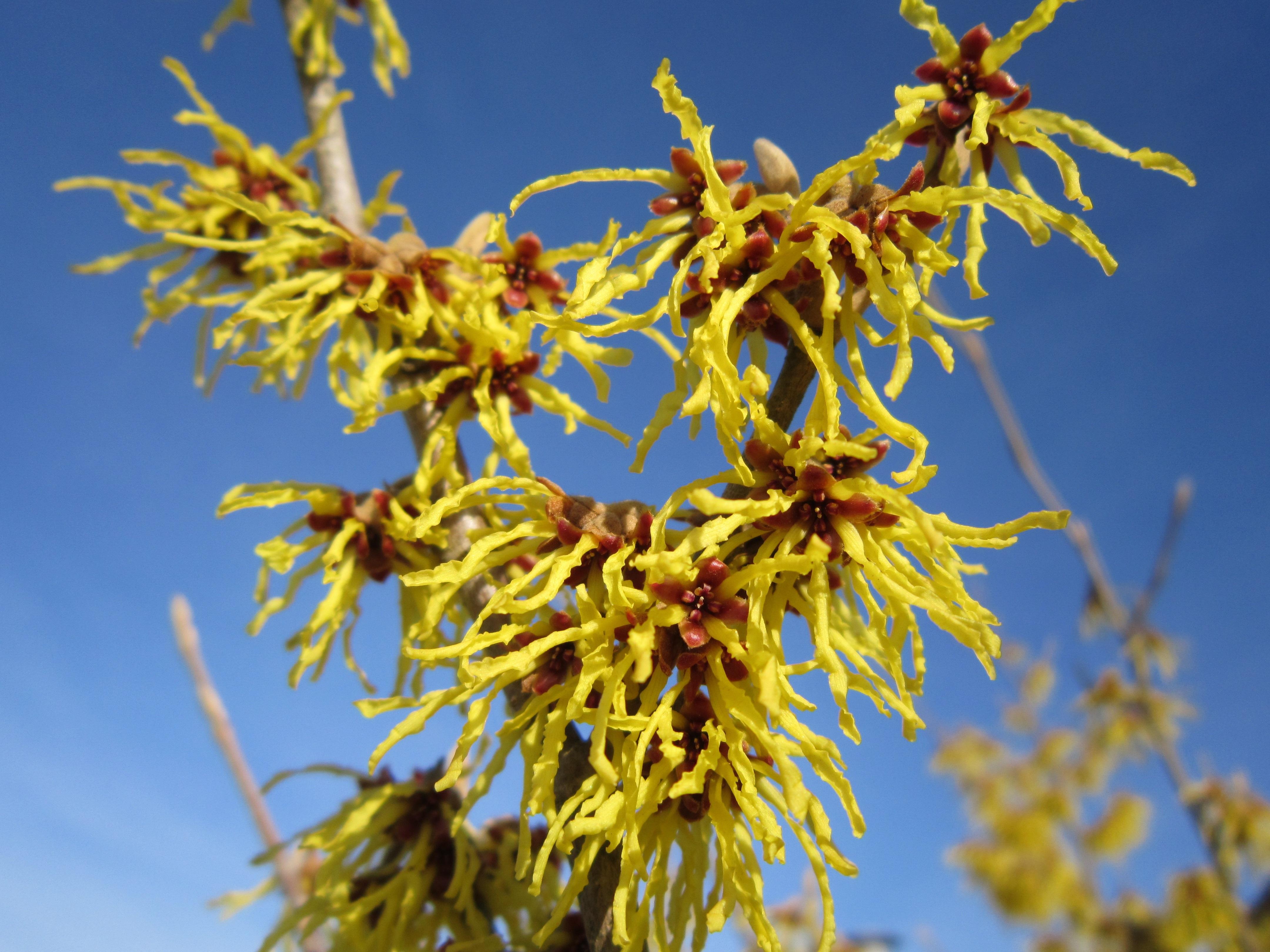 images gratuites arbre branche fleur ciel feuille buisson pollen produire l 39 automne. Black Bedroom Furniture Sets. Home Design Ideas