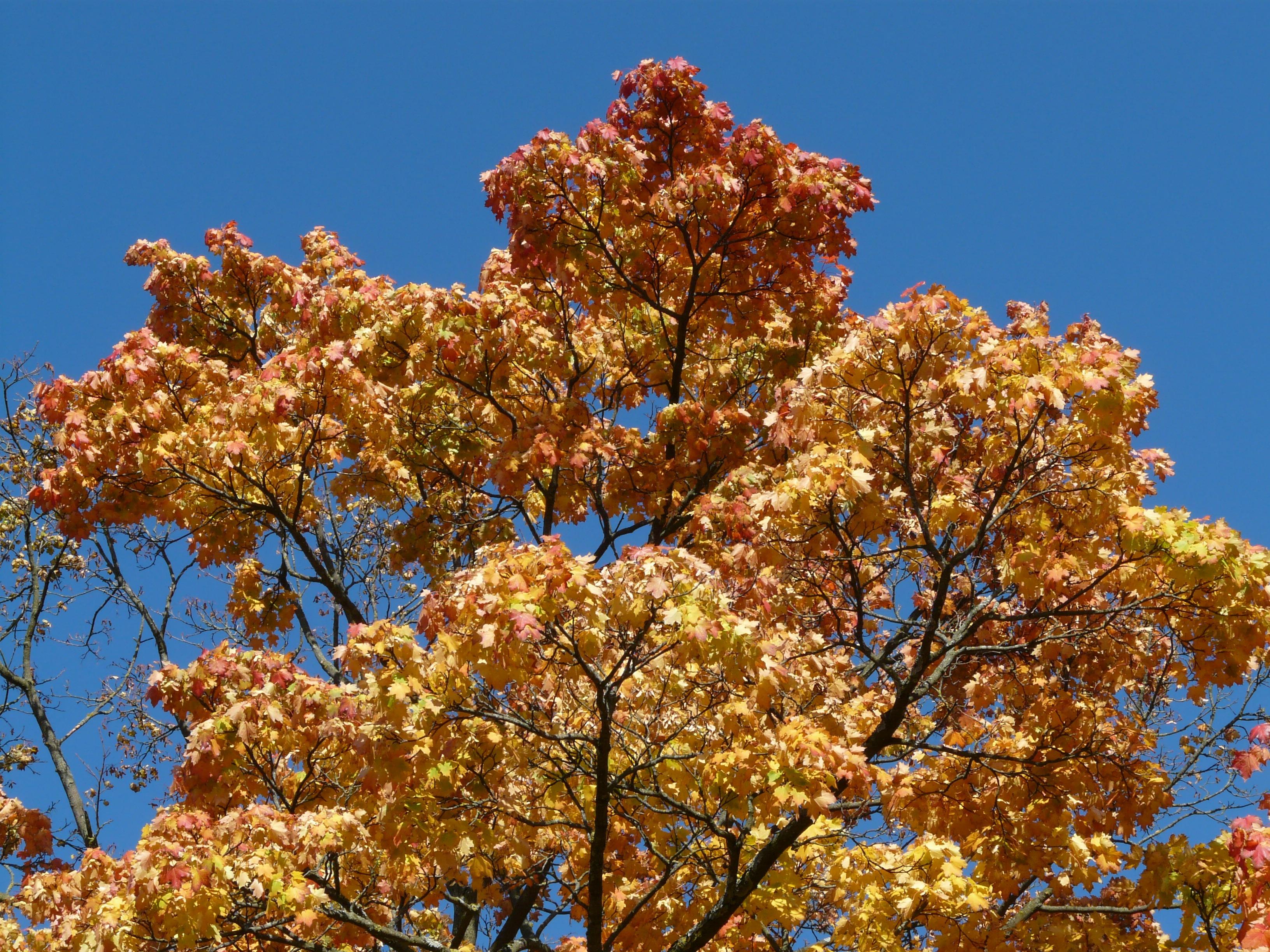 Fotoğraf Ağaç şube çiçek Gökyüzü Yaprak Kırmızı üretmek