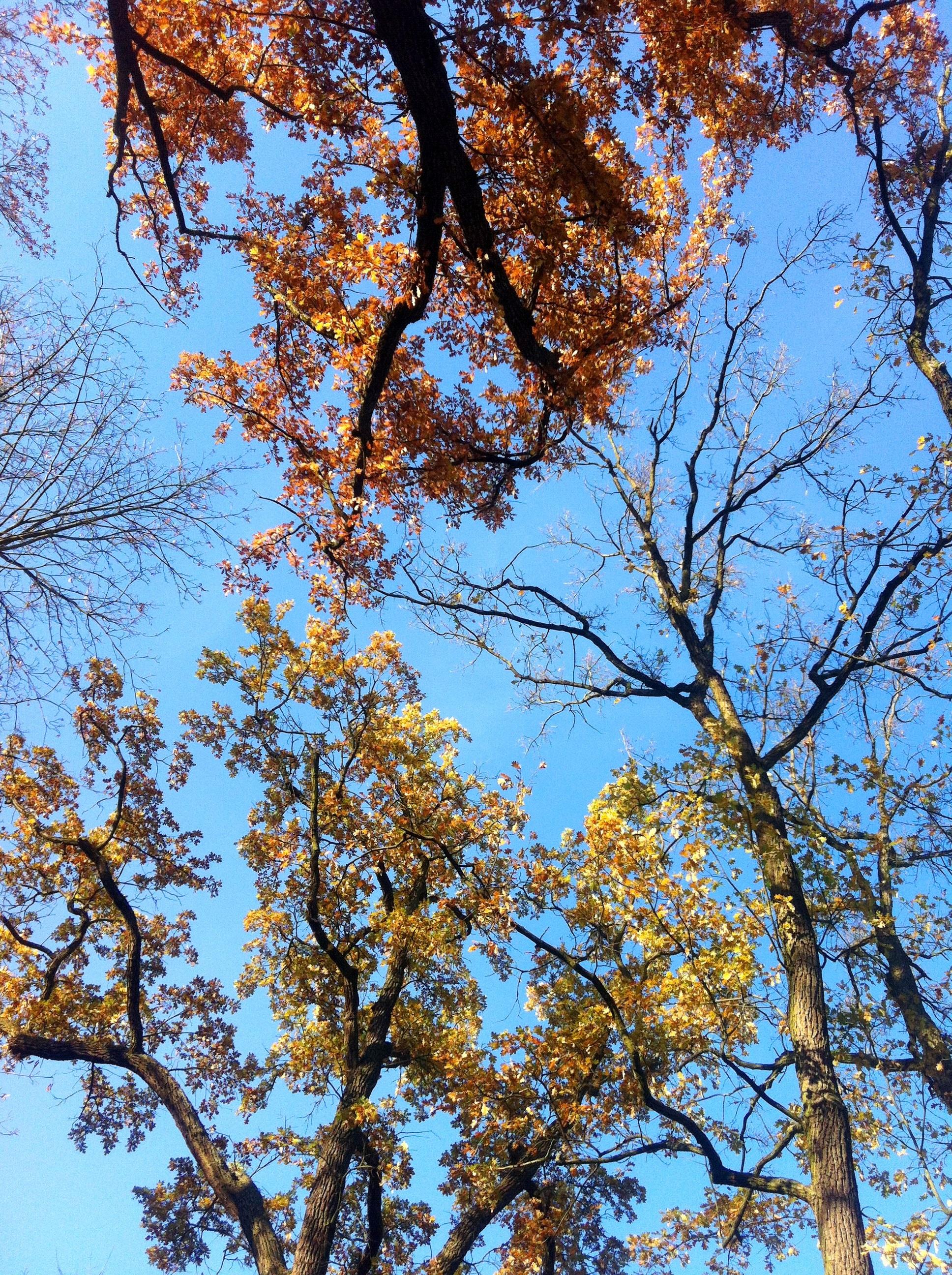 Fotos gratis rbol rama flor luz de sol temporada for Arboles de hoja caduca