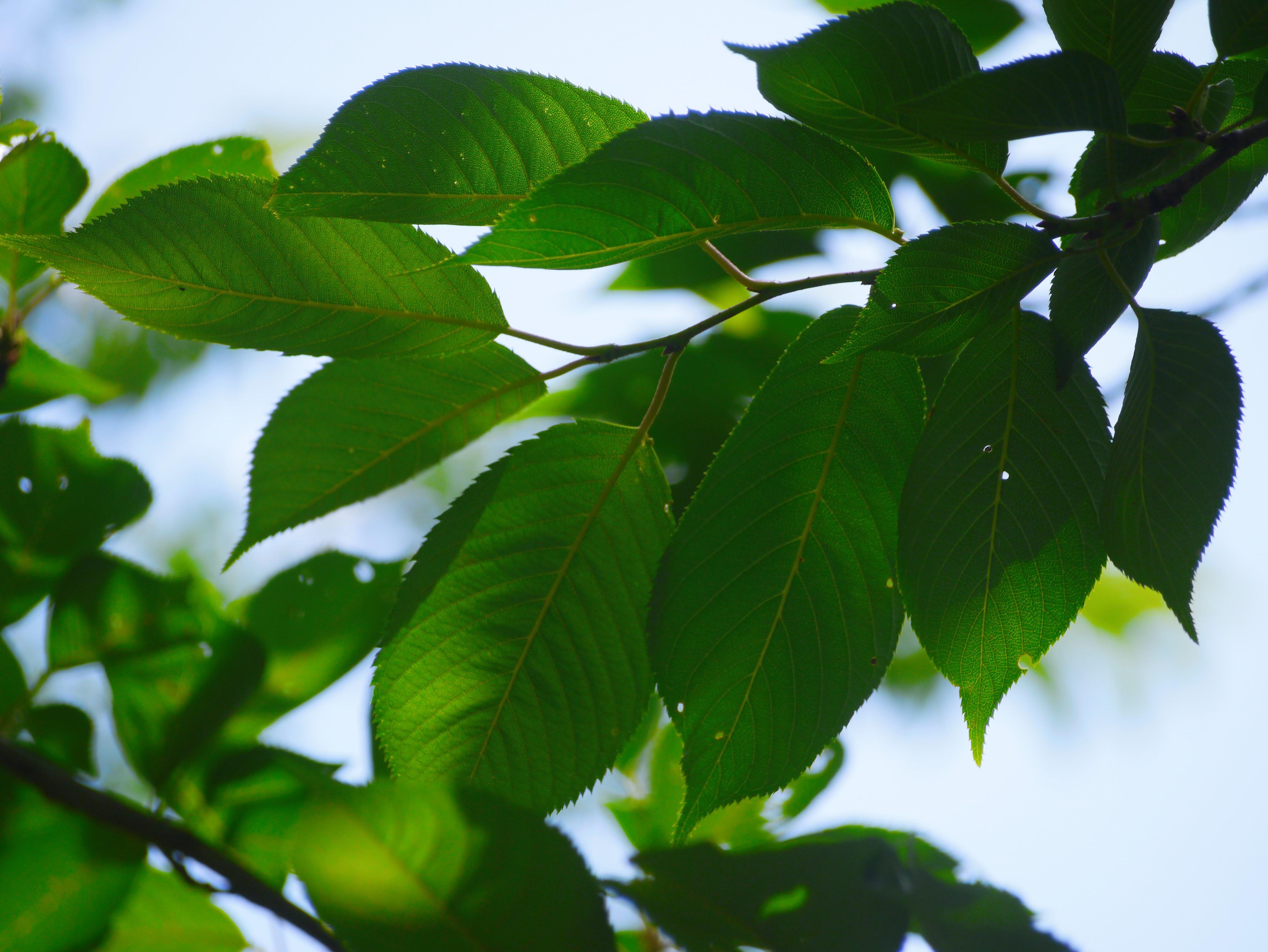 Деревья с листьями картинки