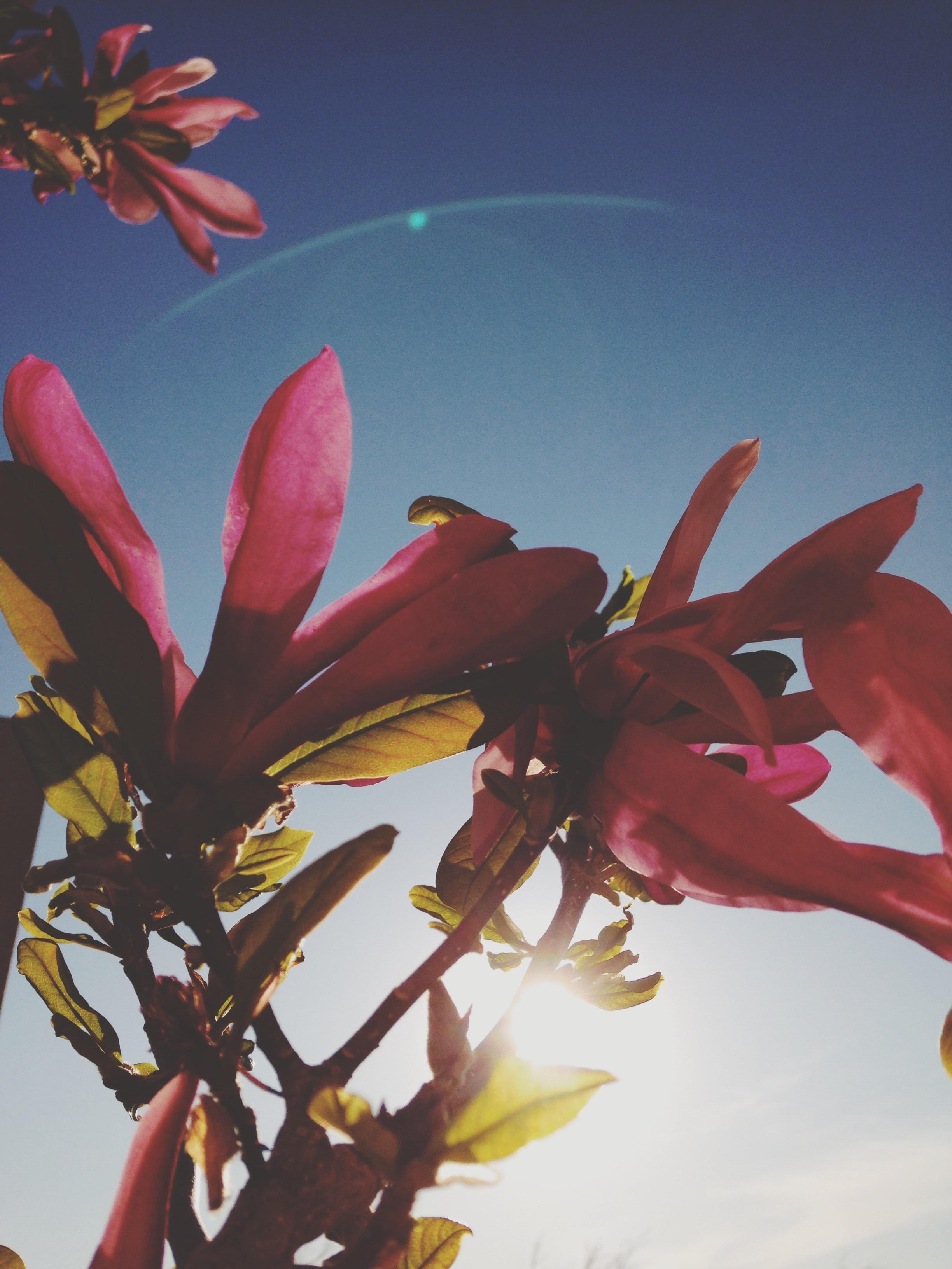 free images tree branch blossom sunlight leaf flower petal