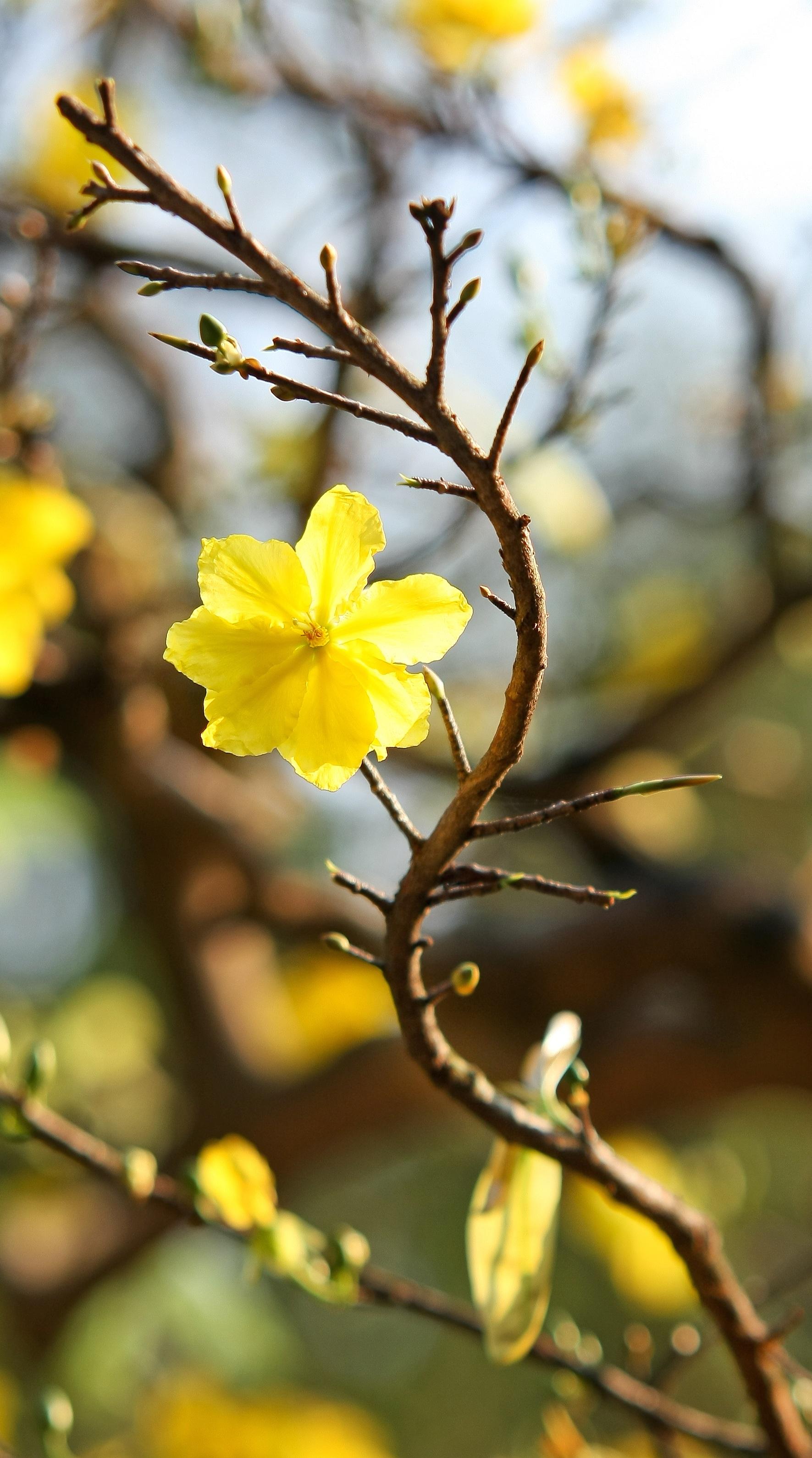 Images gratuites arbre branche fleur lumi re du soleil matin feuille p tale voyage - Fleur du soleil ...