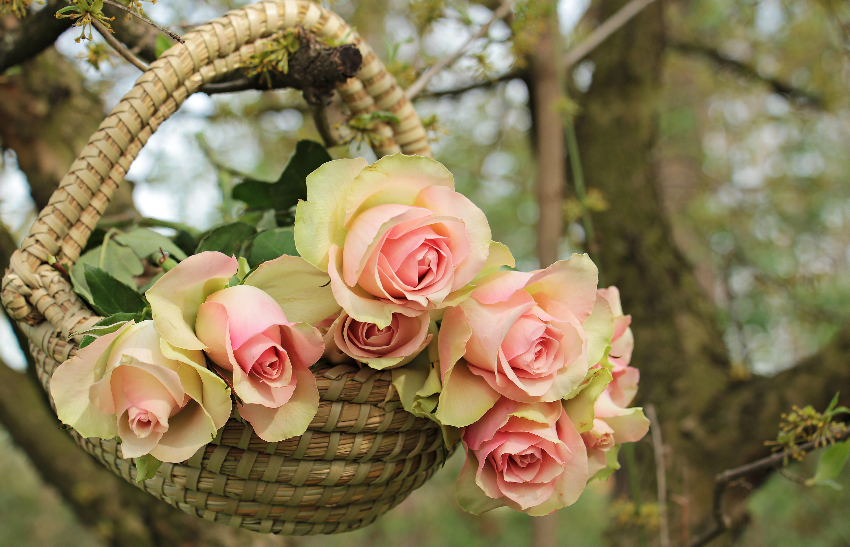 Comment Faire Un Bouquet De Roses images gratuites : arbre, branche, fleur, doux, été, amour