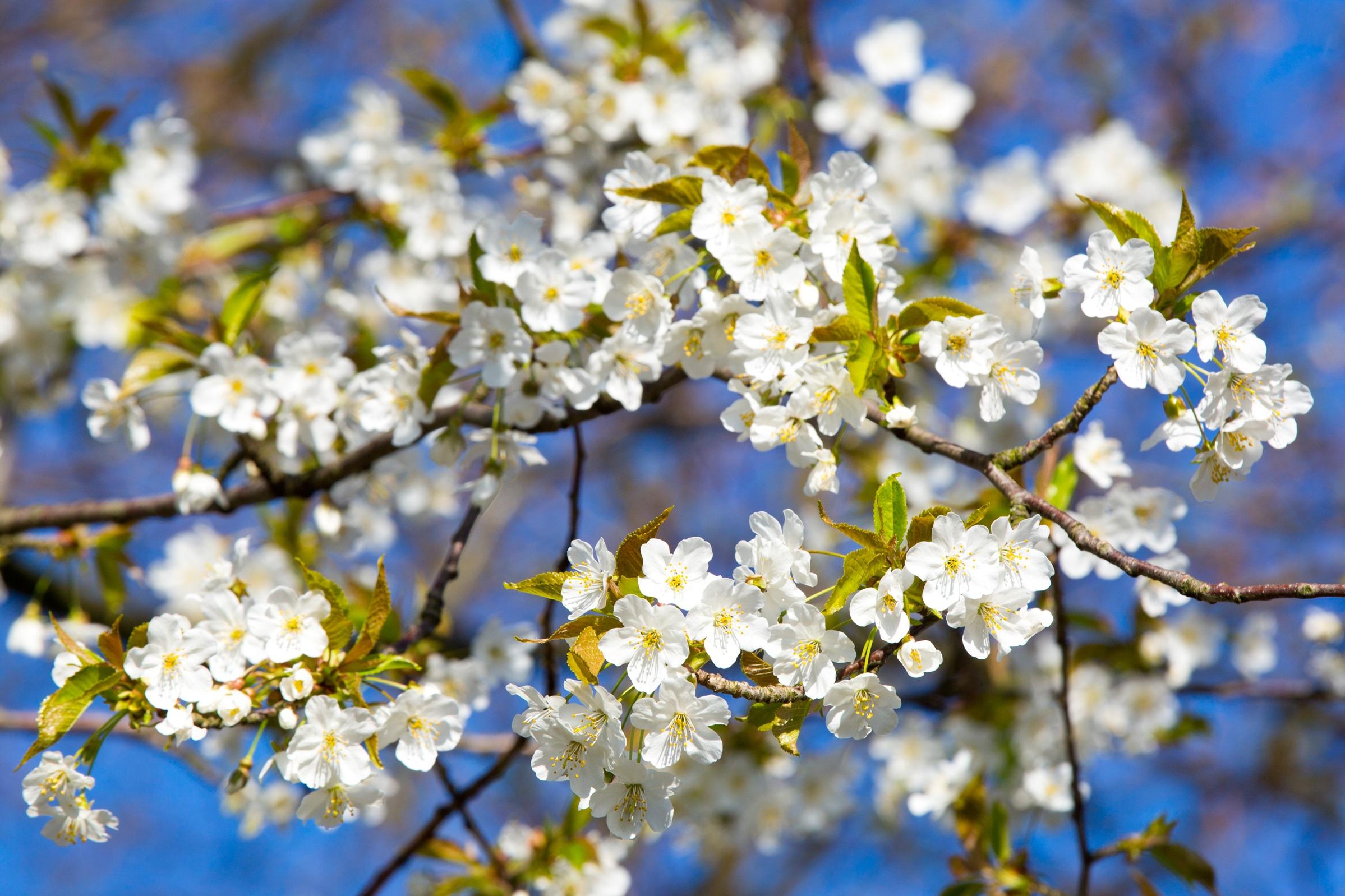 него весна время расцветать картинки вазу бисером технология