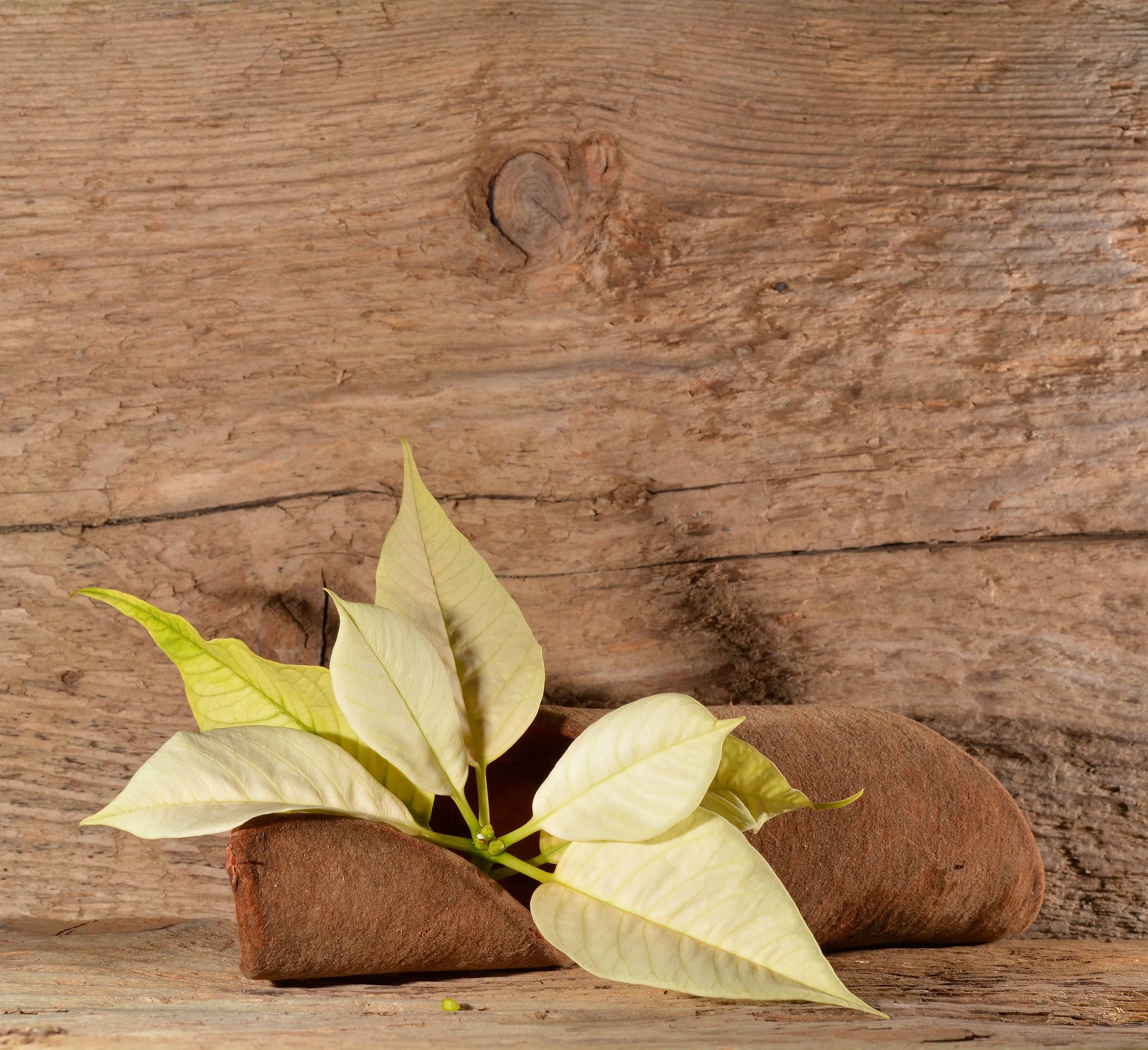 Kostenlose Foto Baum Ast Bluhen Pflanze Holz Blatt Blume