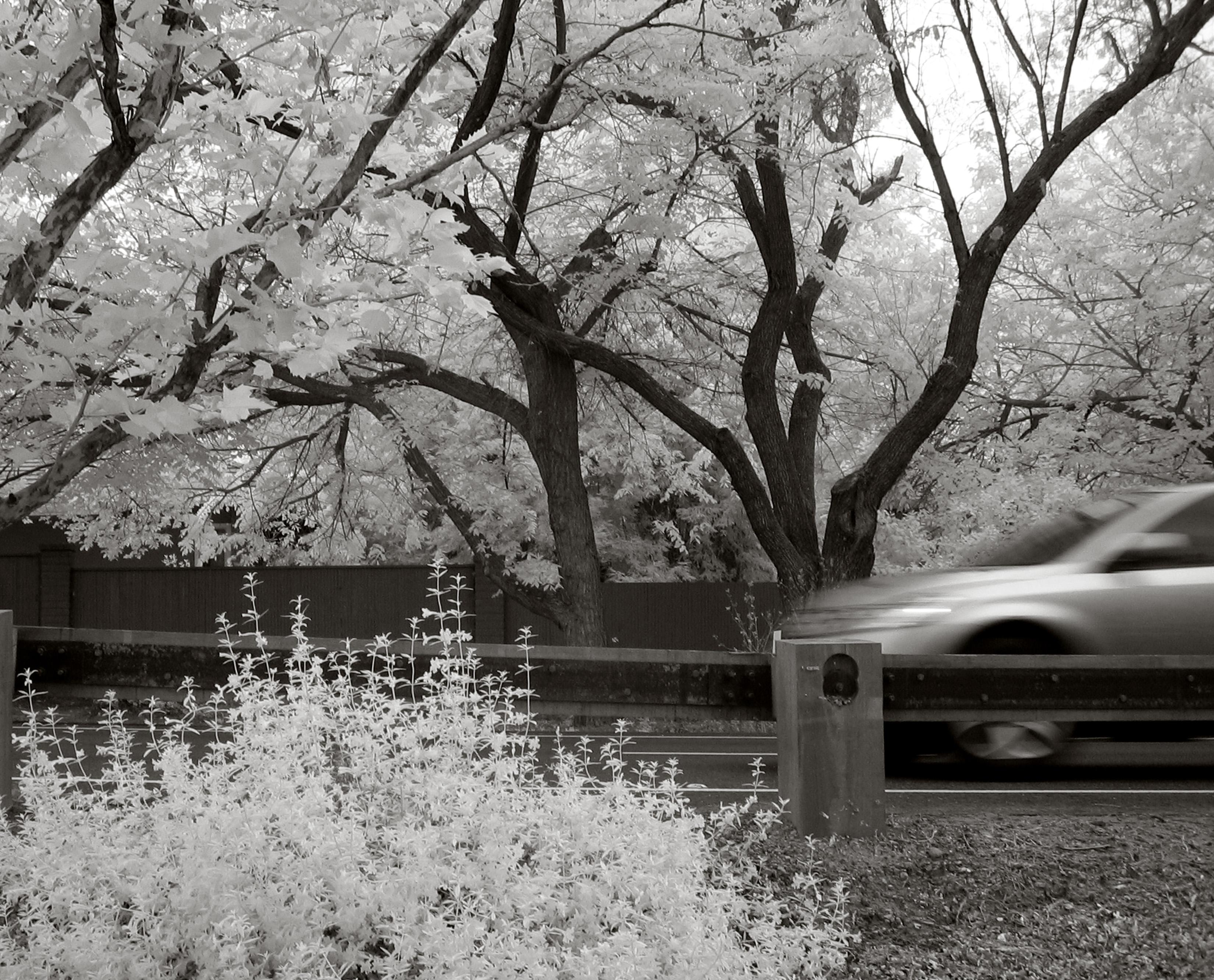 картинки весна монохром лучшие недорогие внедорожники