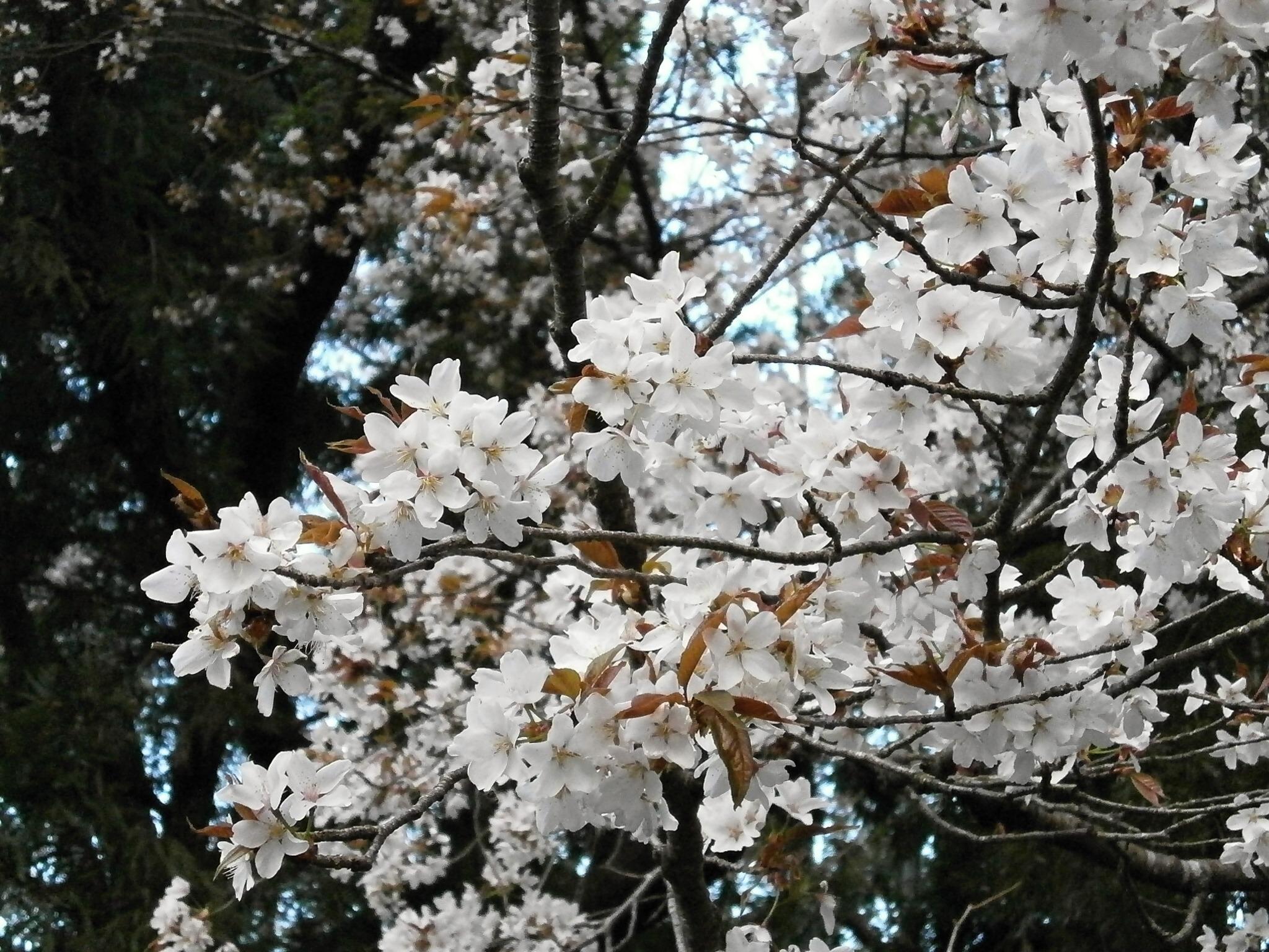 Free branch snow winter produce botany flora season