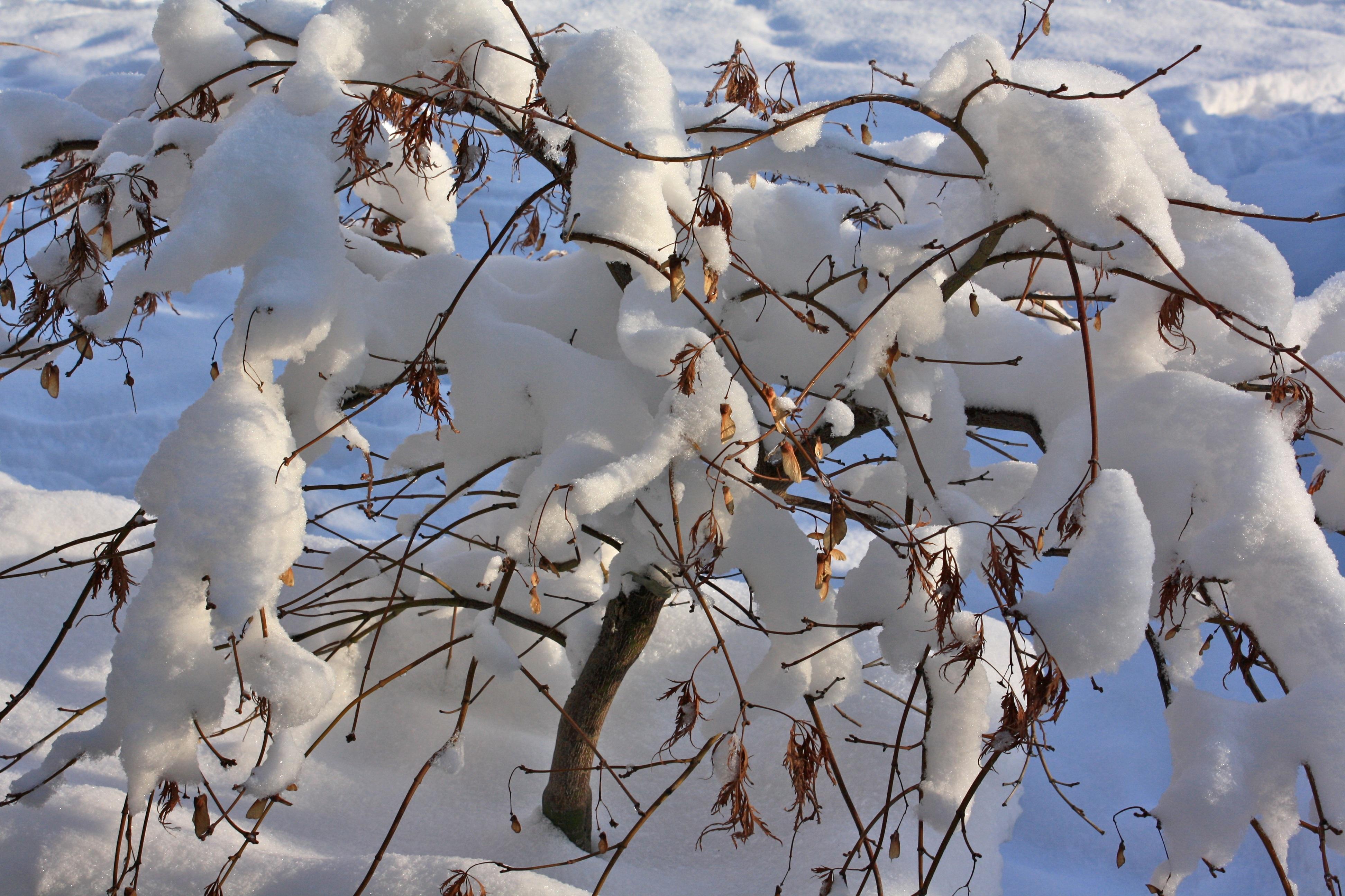 картинка деревья и кусты зимой стремительно заливала