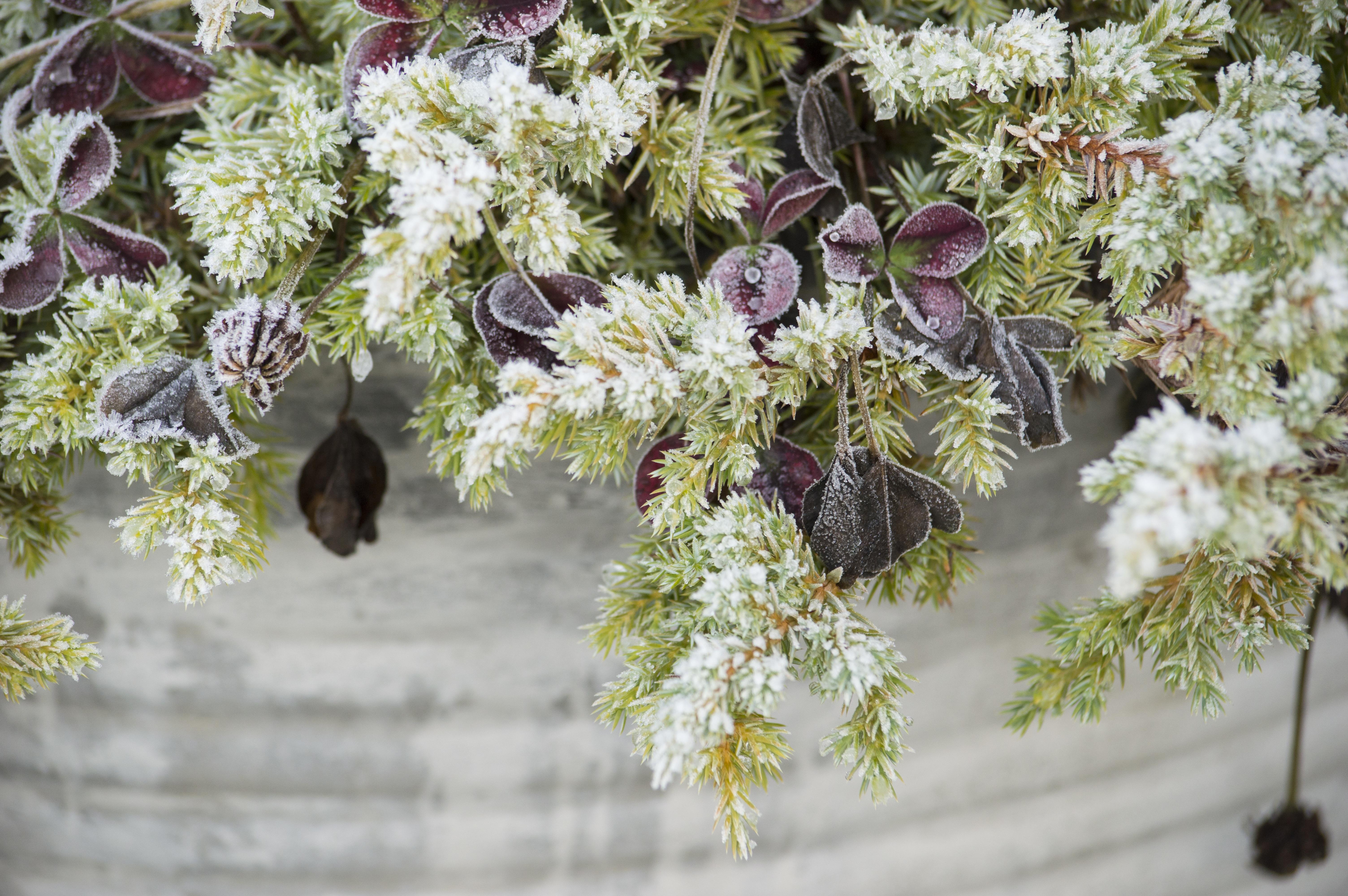 kostenlose foto : baum, ast, blühen, blatt, blume, frost, pot, Gartengerate ideen