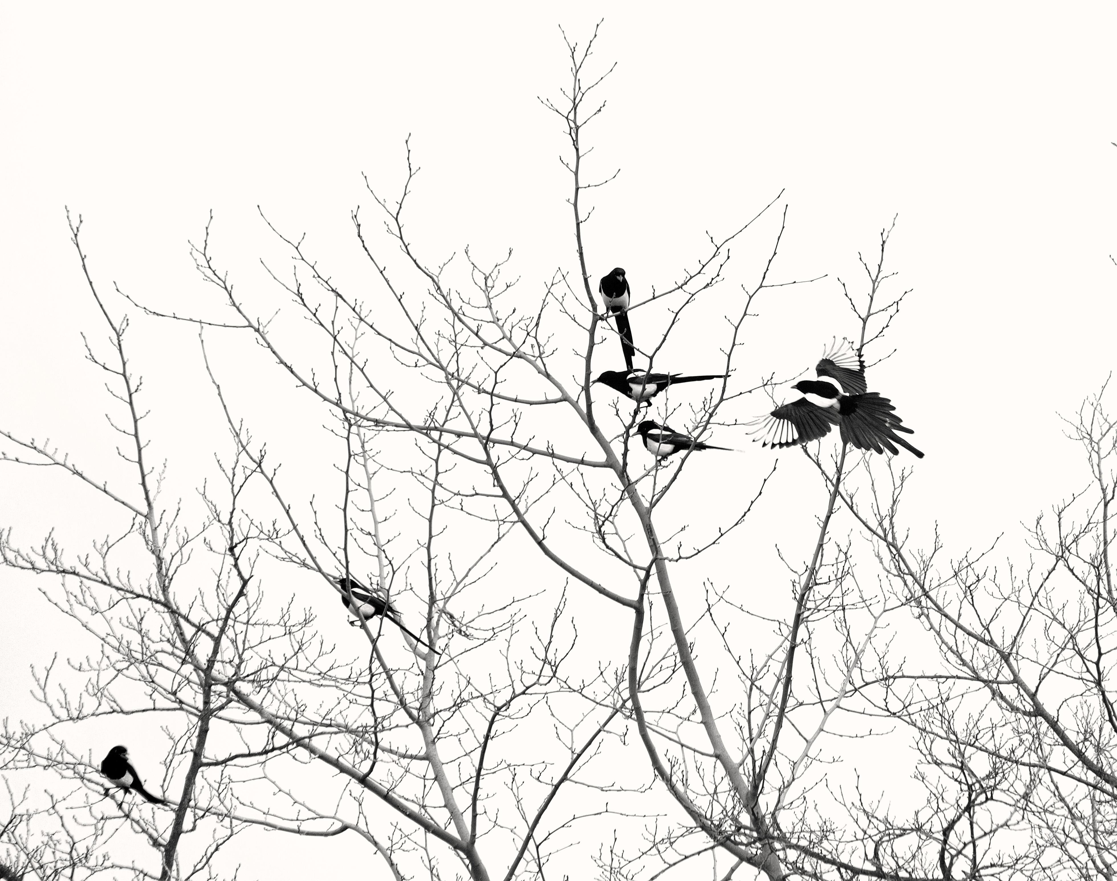 Images Gratuites Arbre Branche Du Froid Hiver Oiseau
