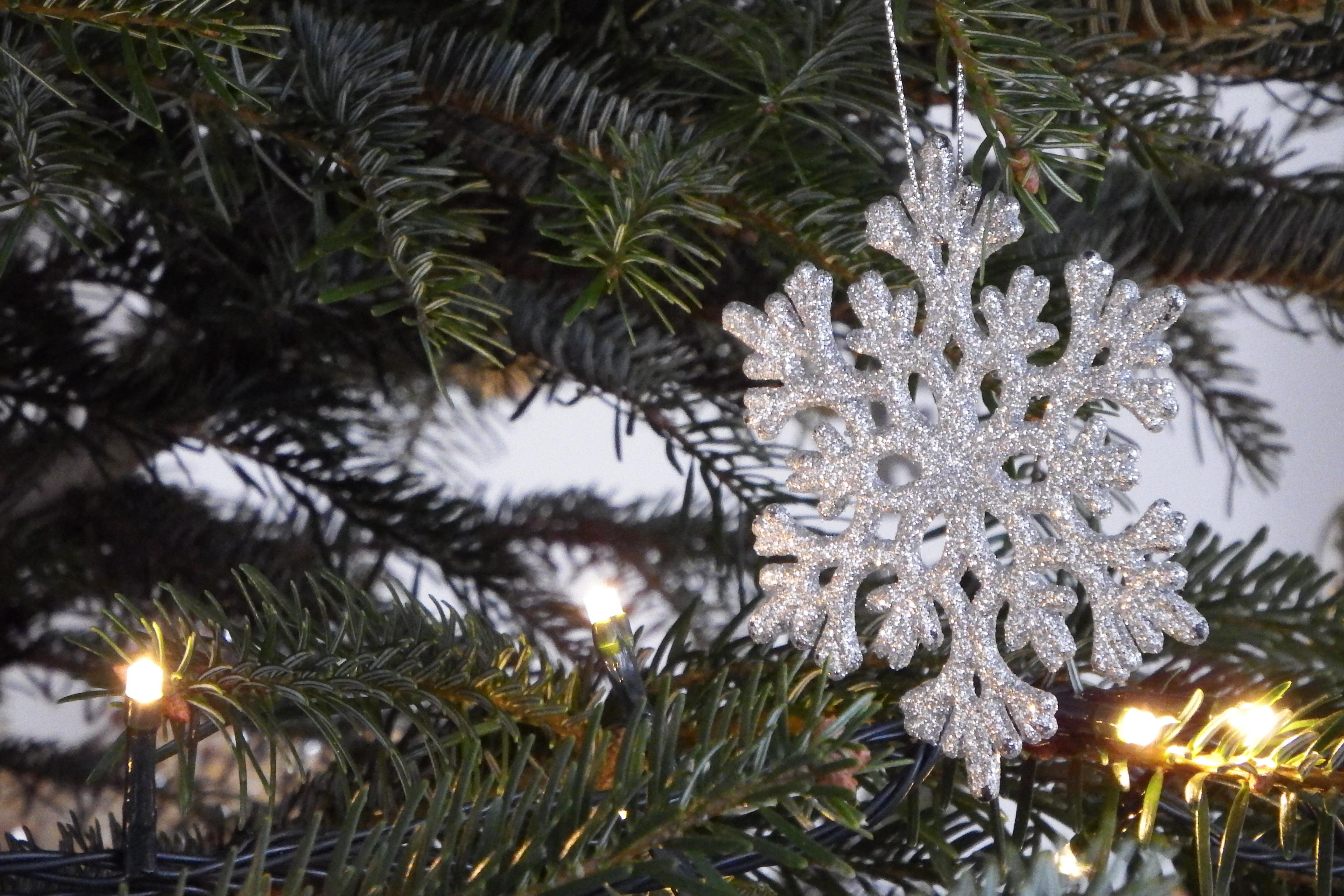 Weihnachtsbaum Ast.Kostenlose Foto Baum Ast Dekoration Weihnachten Tanne