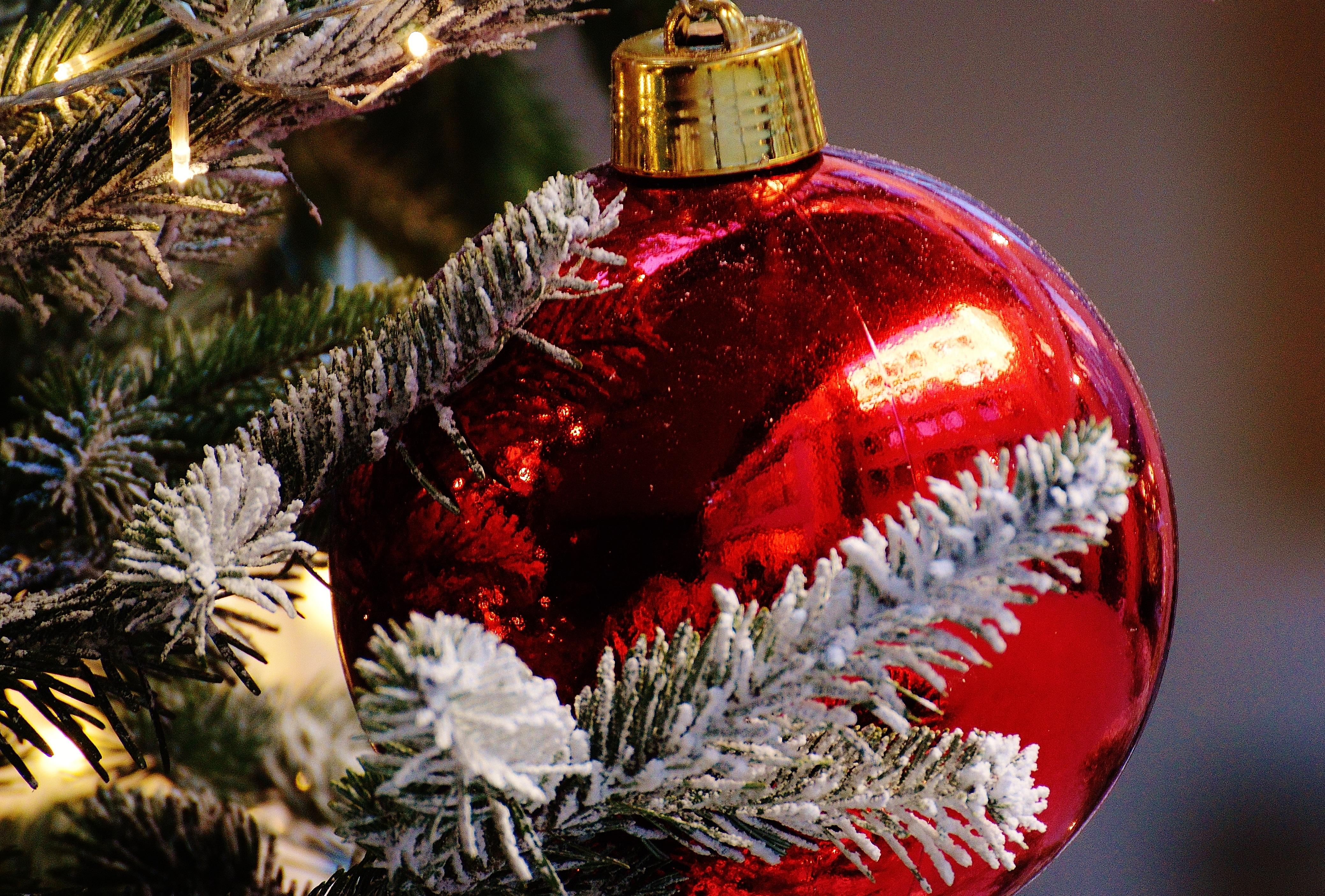 Kostenlose Foto Baum Ast Dekoration Rot Urlaub