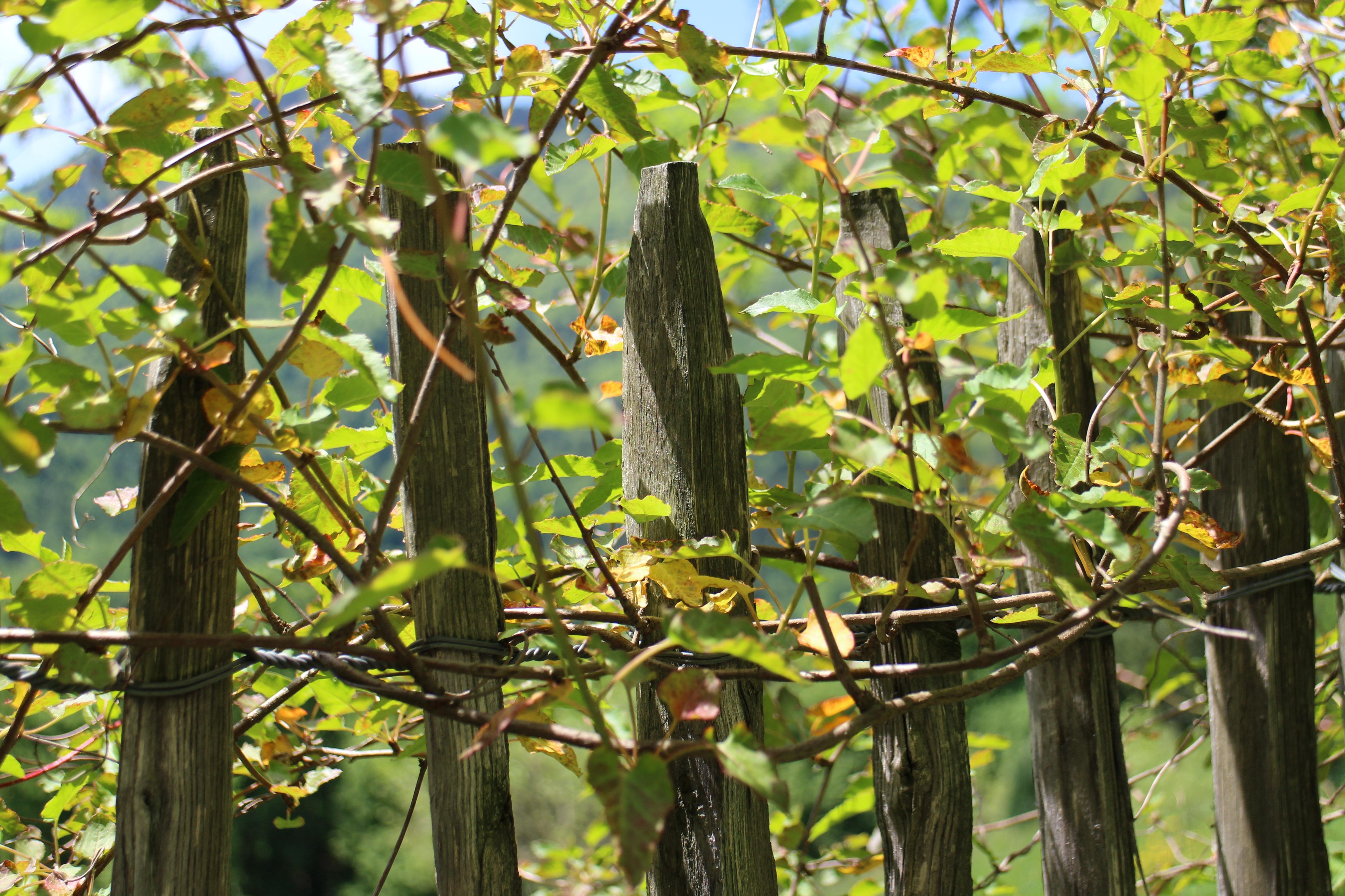 Fotos Gratis Arbol Rama Cerca Crecimiento Fruta Hoja Flor - Arbustos-para-vallas
