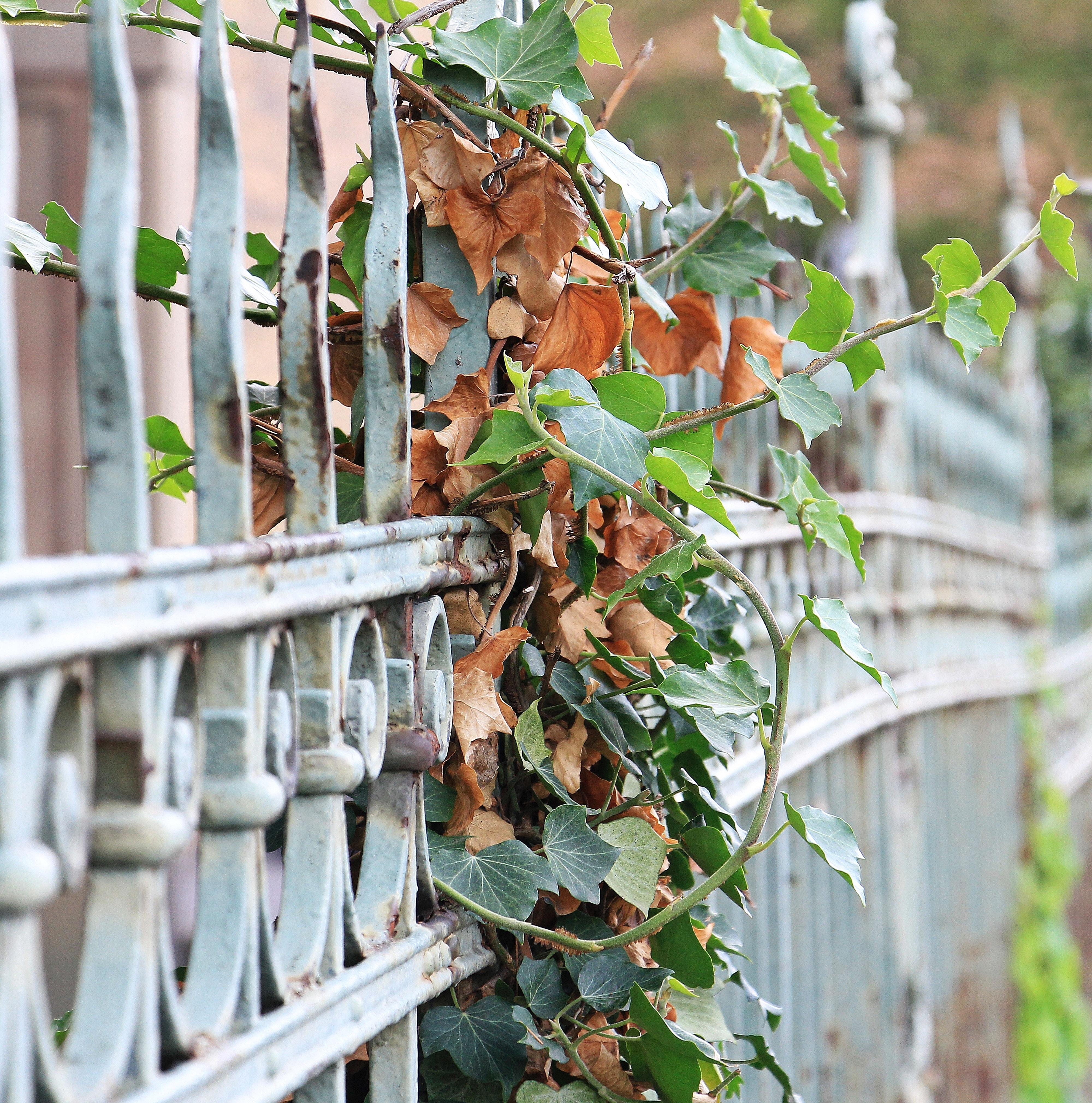 Kostenlose foto Baum Ast Zaun Blatt Blume alt Lebensmittel