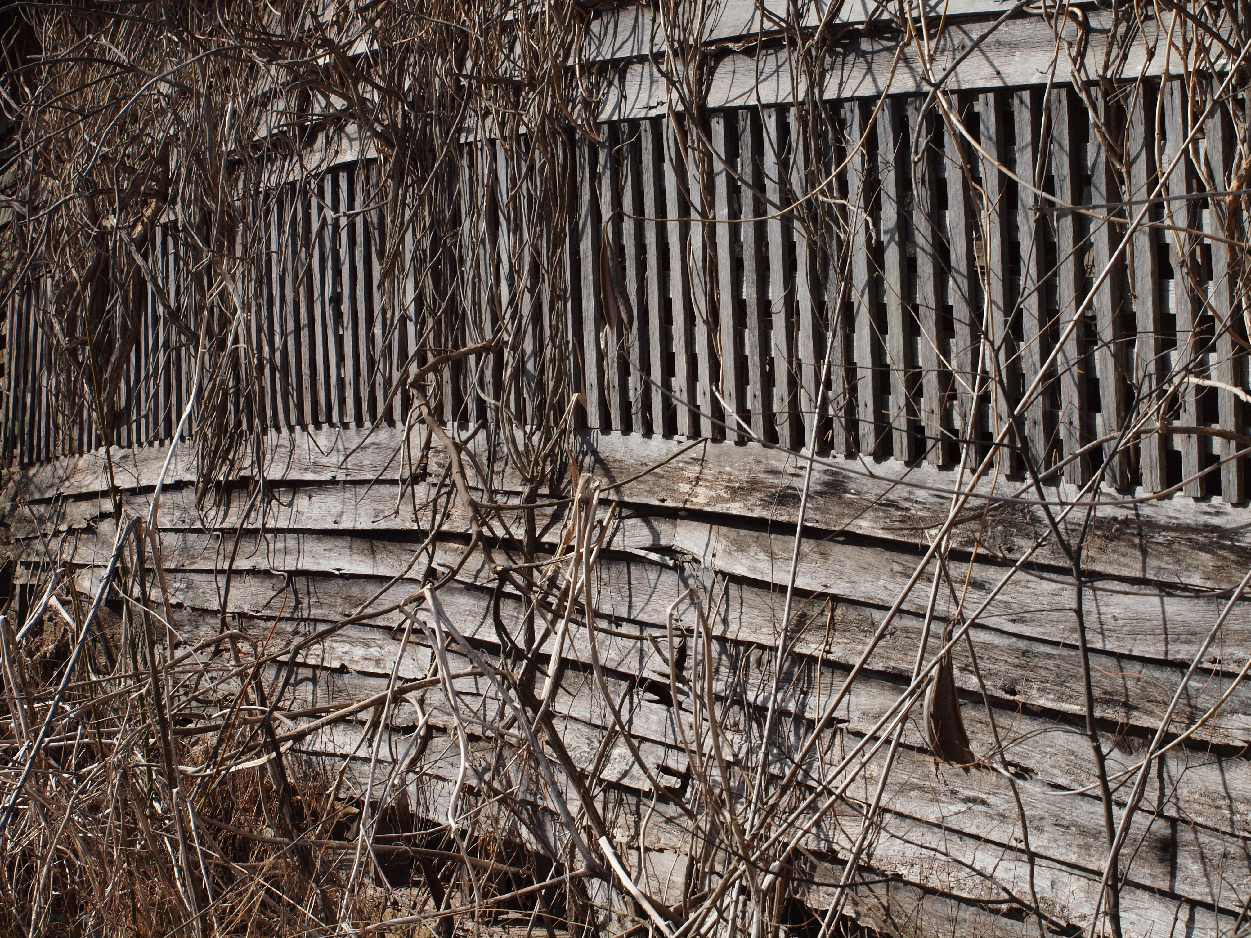 Fotos gratis : árbol, rama, cerca, antiguo, granero, rústico ...