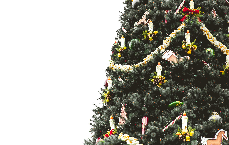Images Gratuites Branche Fleur Sapin Arbre De Noël De