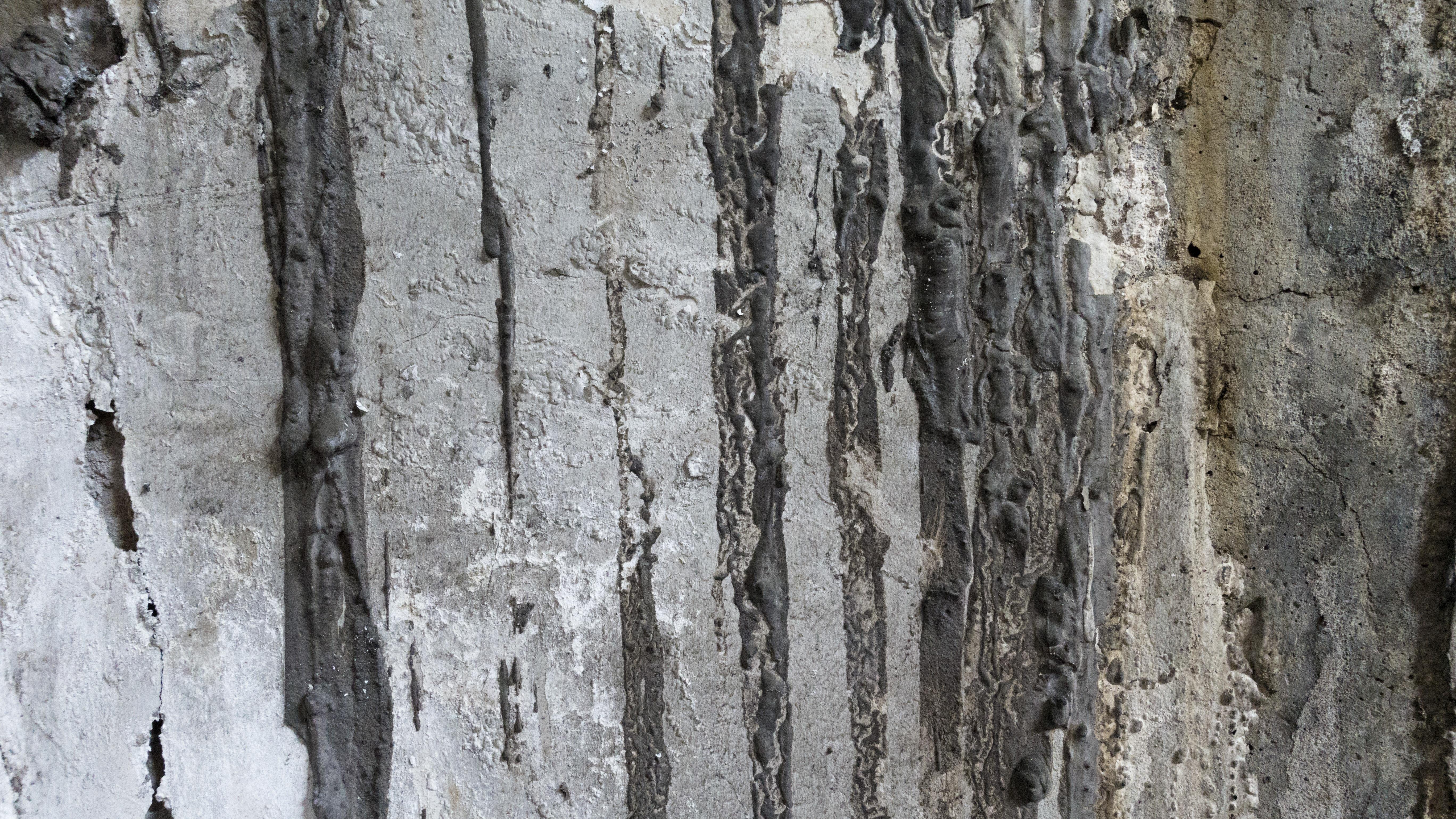 무료 이미지 : 분기, 지저분한, 목재, 조직, 트렁크, 벽, 자작 나무 ...