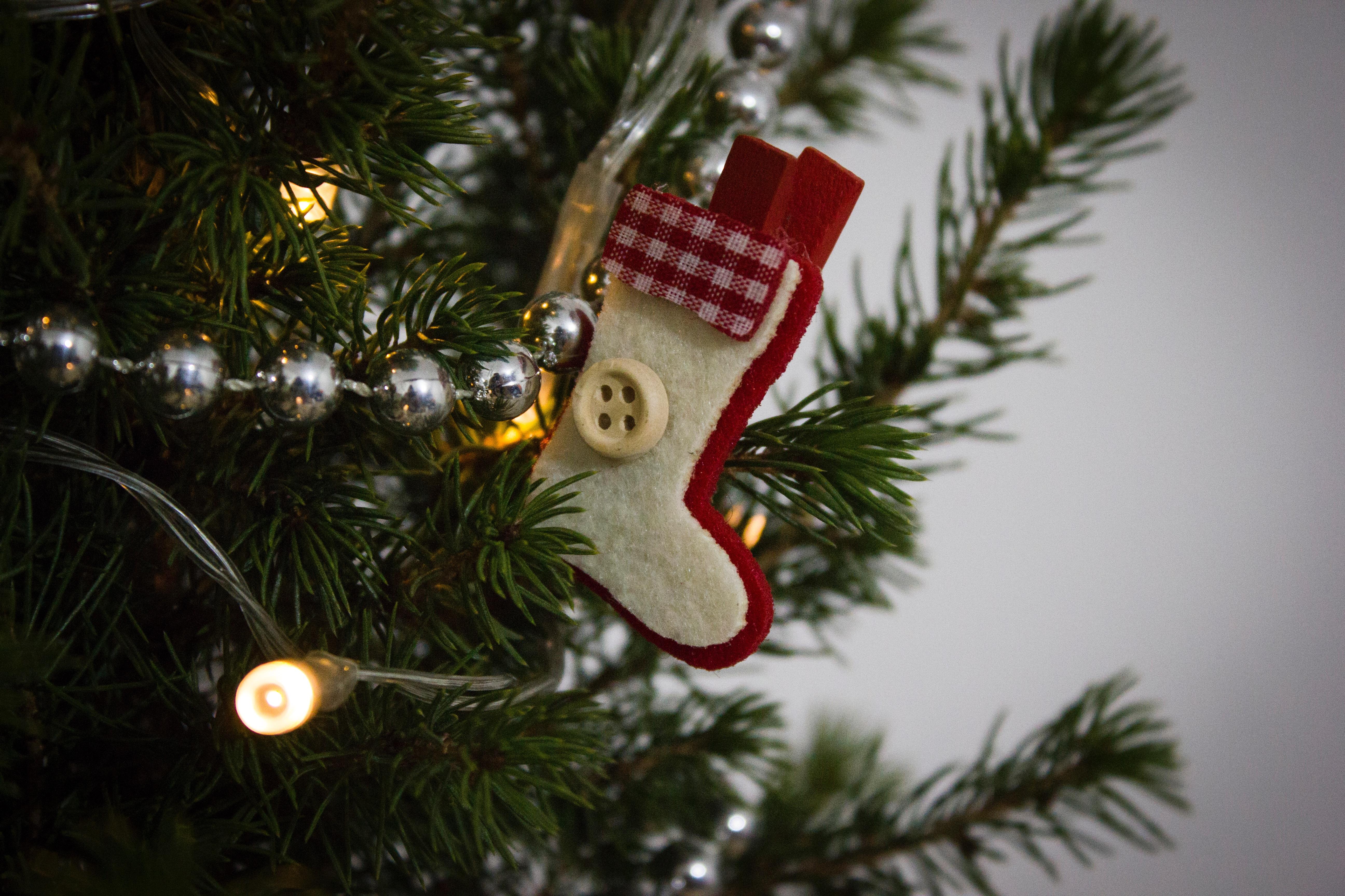 Weihnachtsbaum Ast.Kostenlose Foto Baum Ast Urlaub Weihnachten Tanne