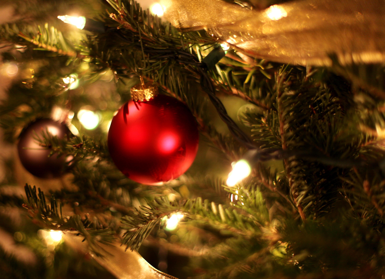 hình ảnh : chi nhánh, ngày lễ, Giáng Sinh, cây thông ...