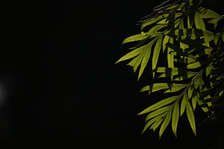 Unduh 77+ Background Hijau Kuning Putih Gratis Terbaru
