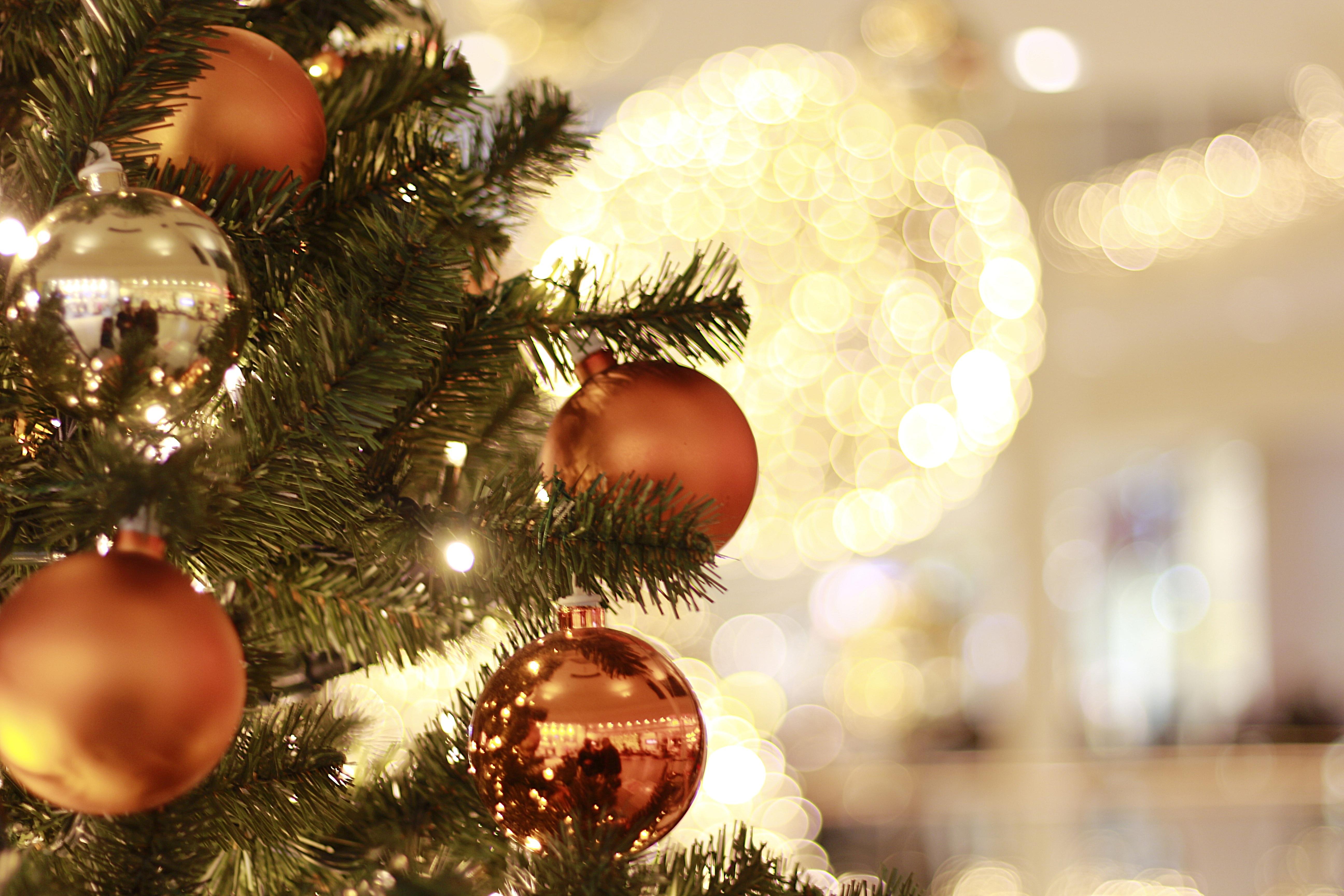 Free Images : branch, light, christmas tree, advent, christmas ...
