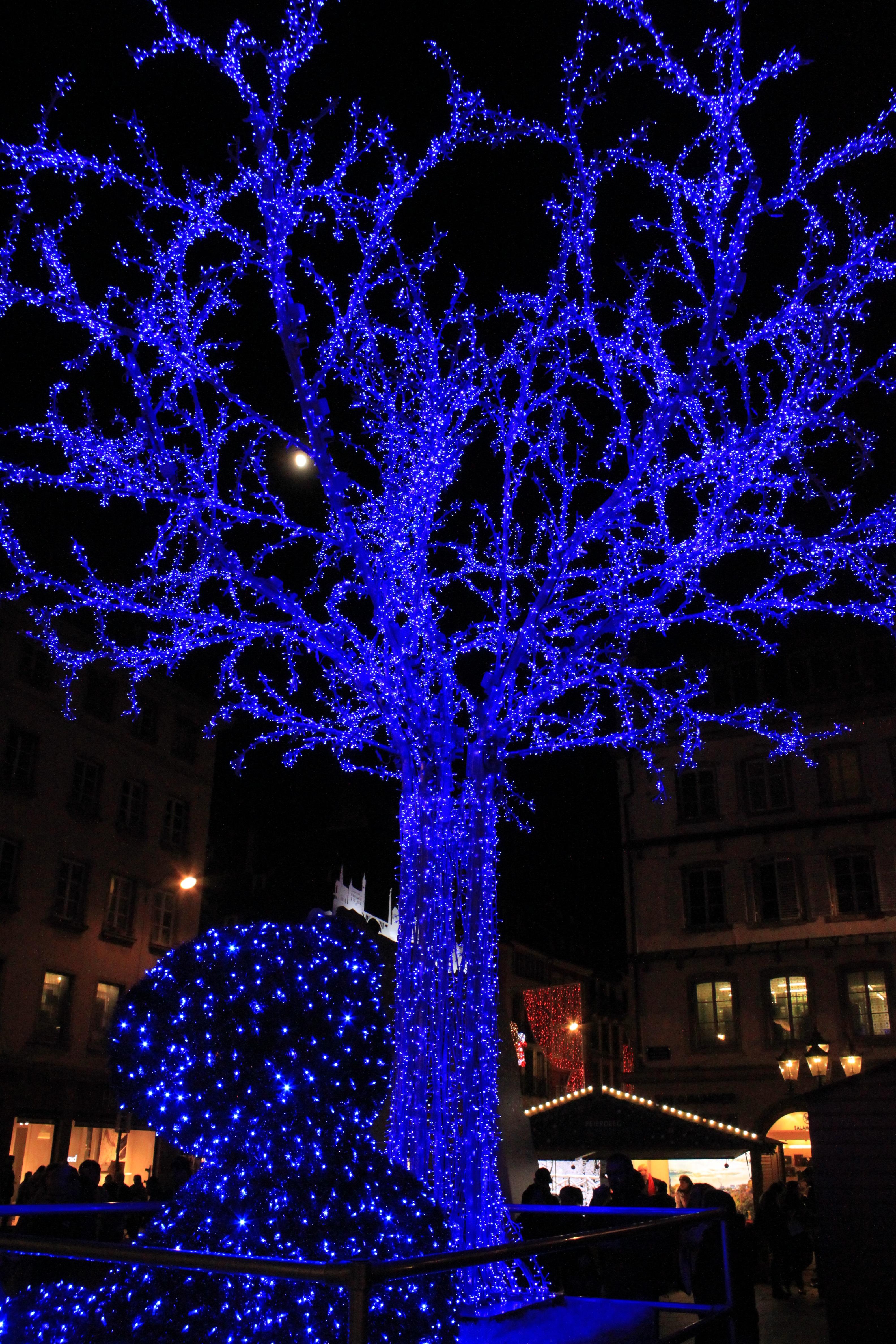 images gratuites branche lumi re nuit fleur bleu clairage d cor arbre de no l. Black Bedroom Furniture Sets. Home Design Ideas