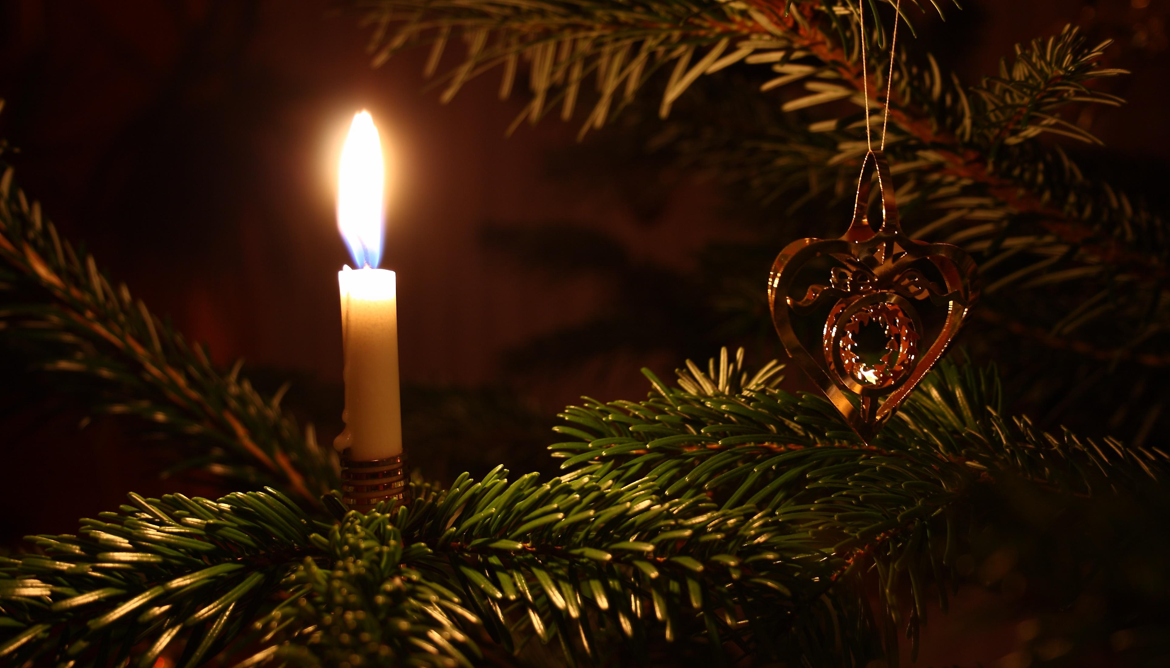 tree branch light night holiday darkness christmas fir lighting decor christmas tree christmas decoration event christmas
