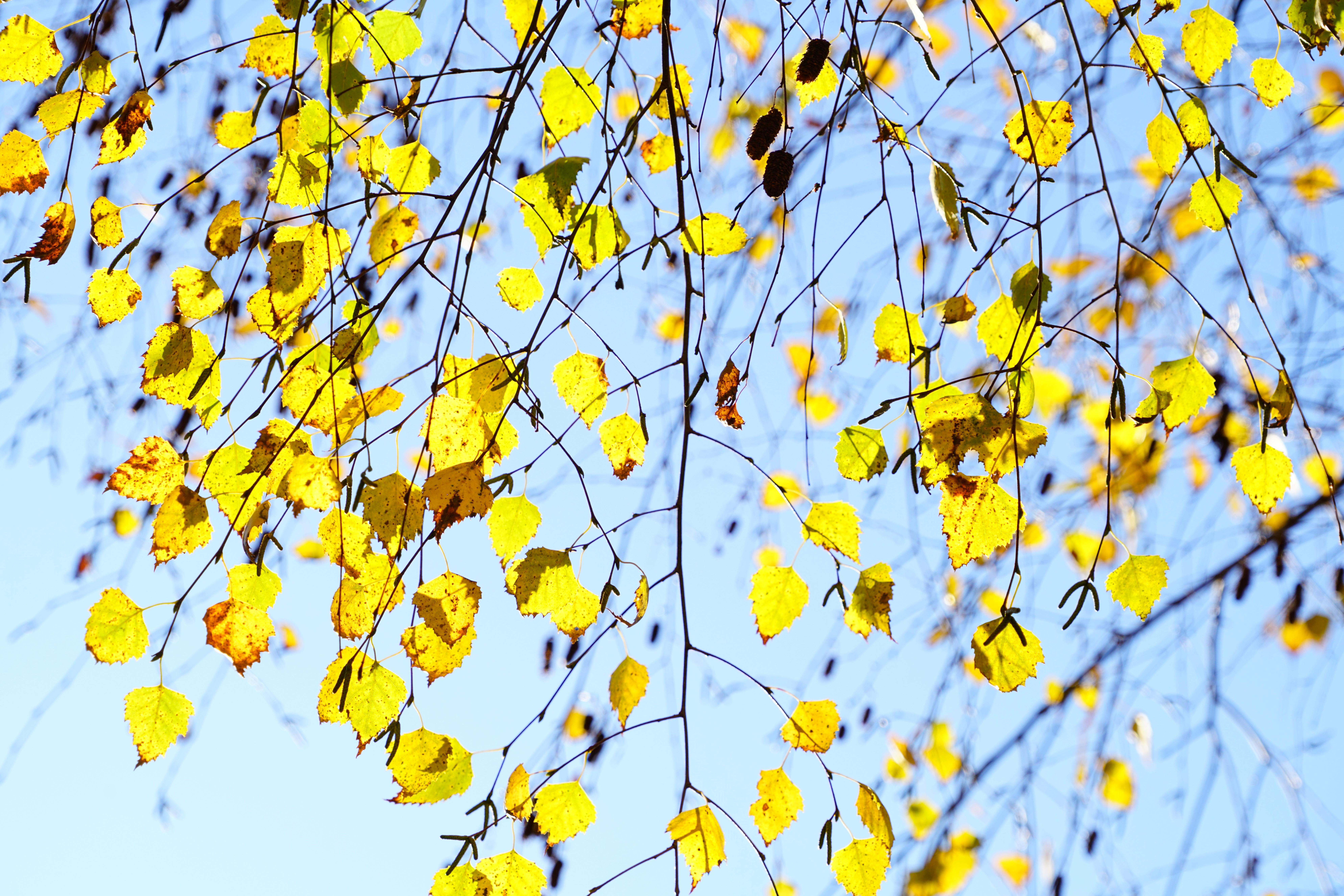 Fotos gratis : árbol, rama, ligero, cielo, flor, pétalo, patrón ...
