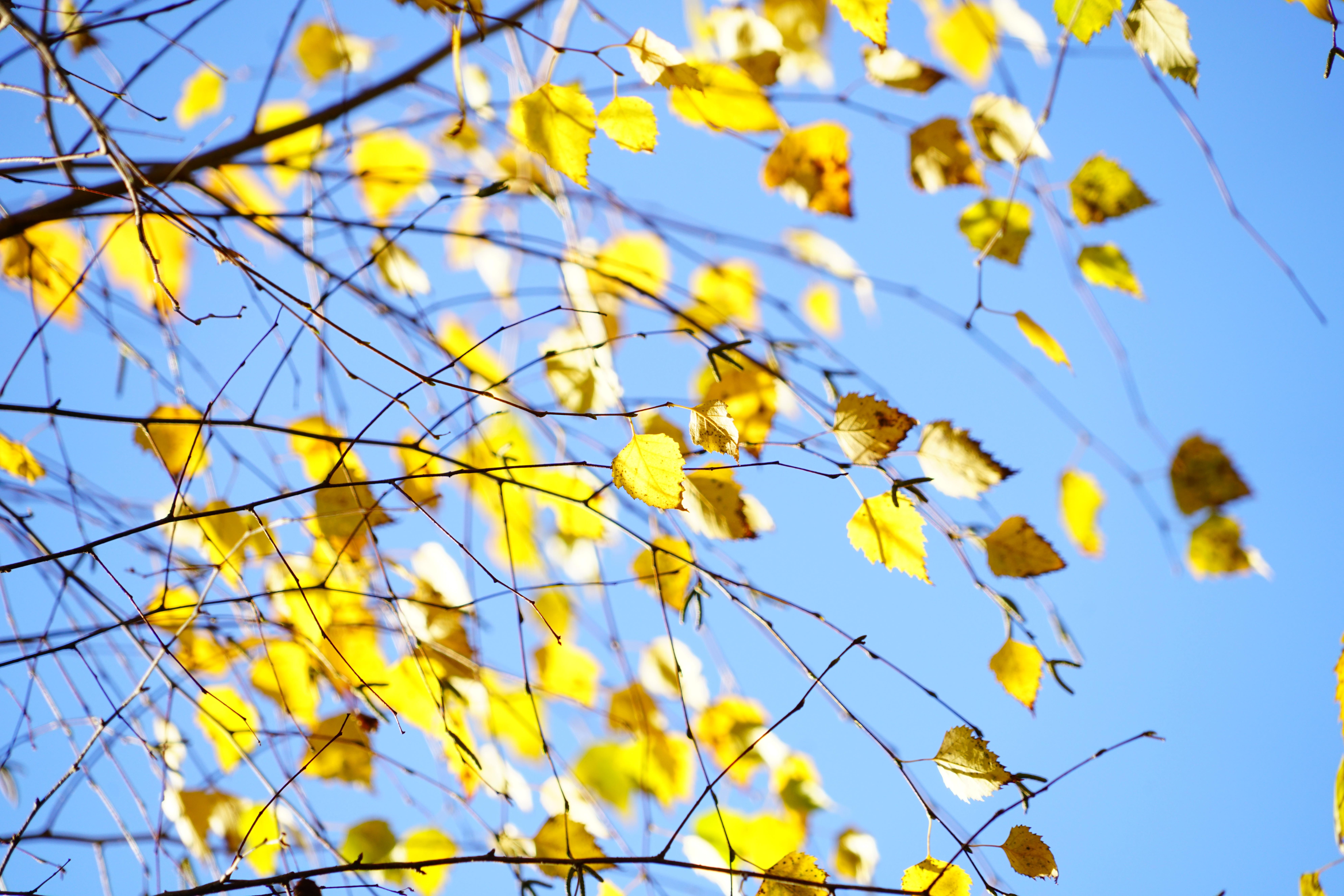Free Images Branch Sky Sunlight Leaf Daytime Pattern