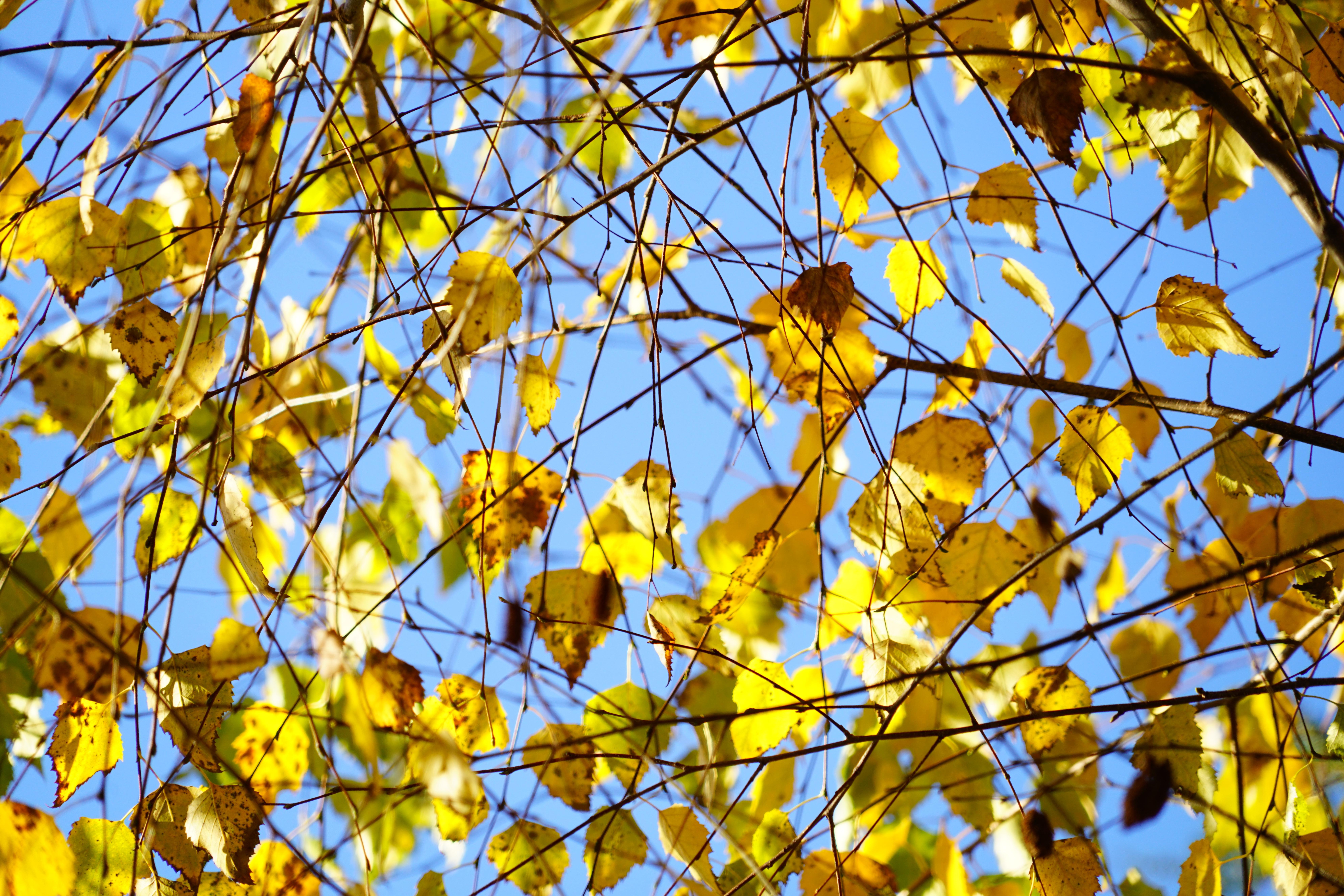 Free Images Branch Plant Sky Sunlight Leaf Spring Autumn