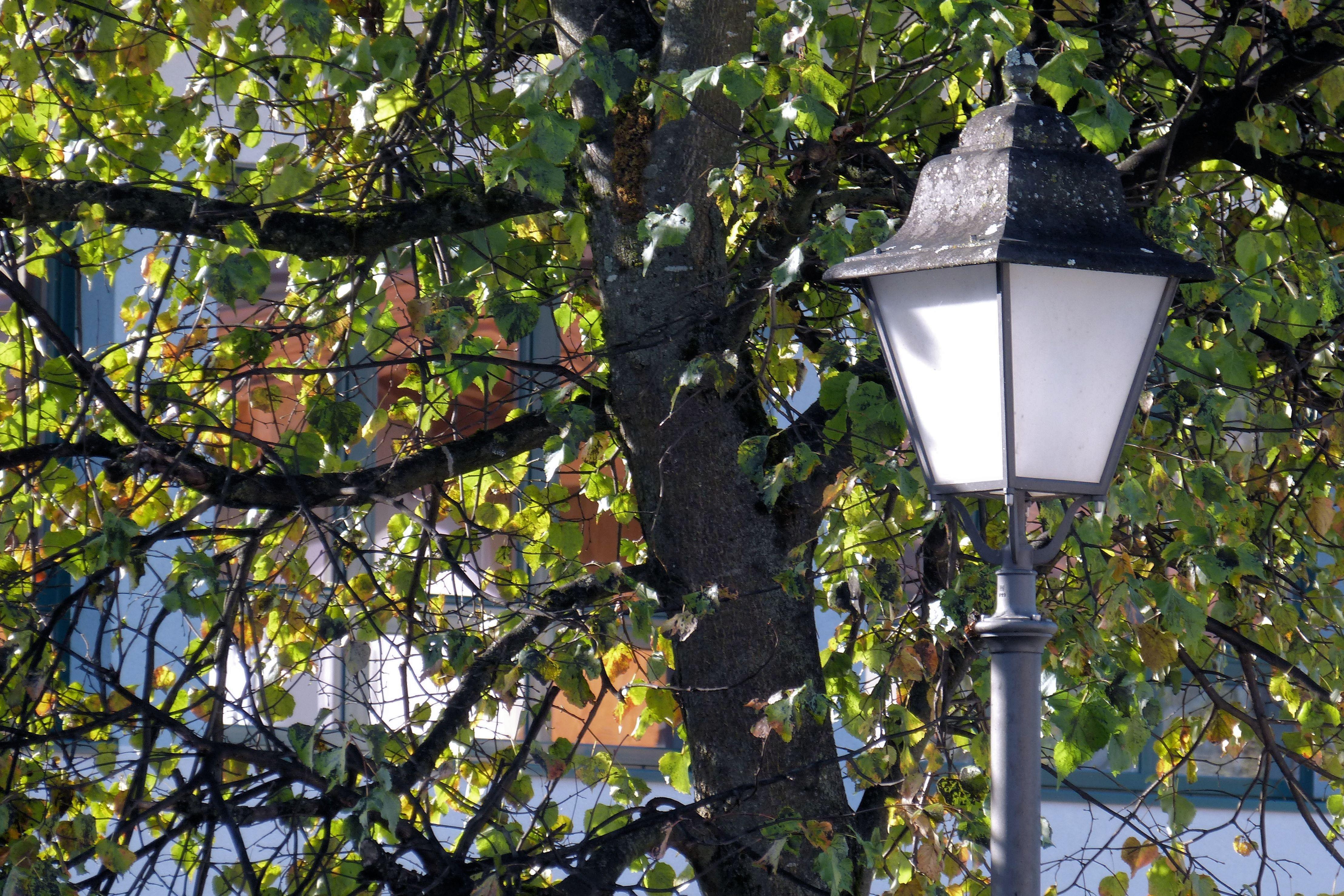 Картинка дерево фонарь