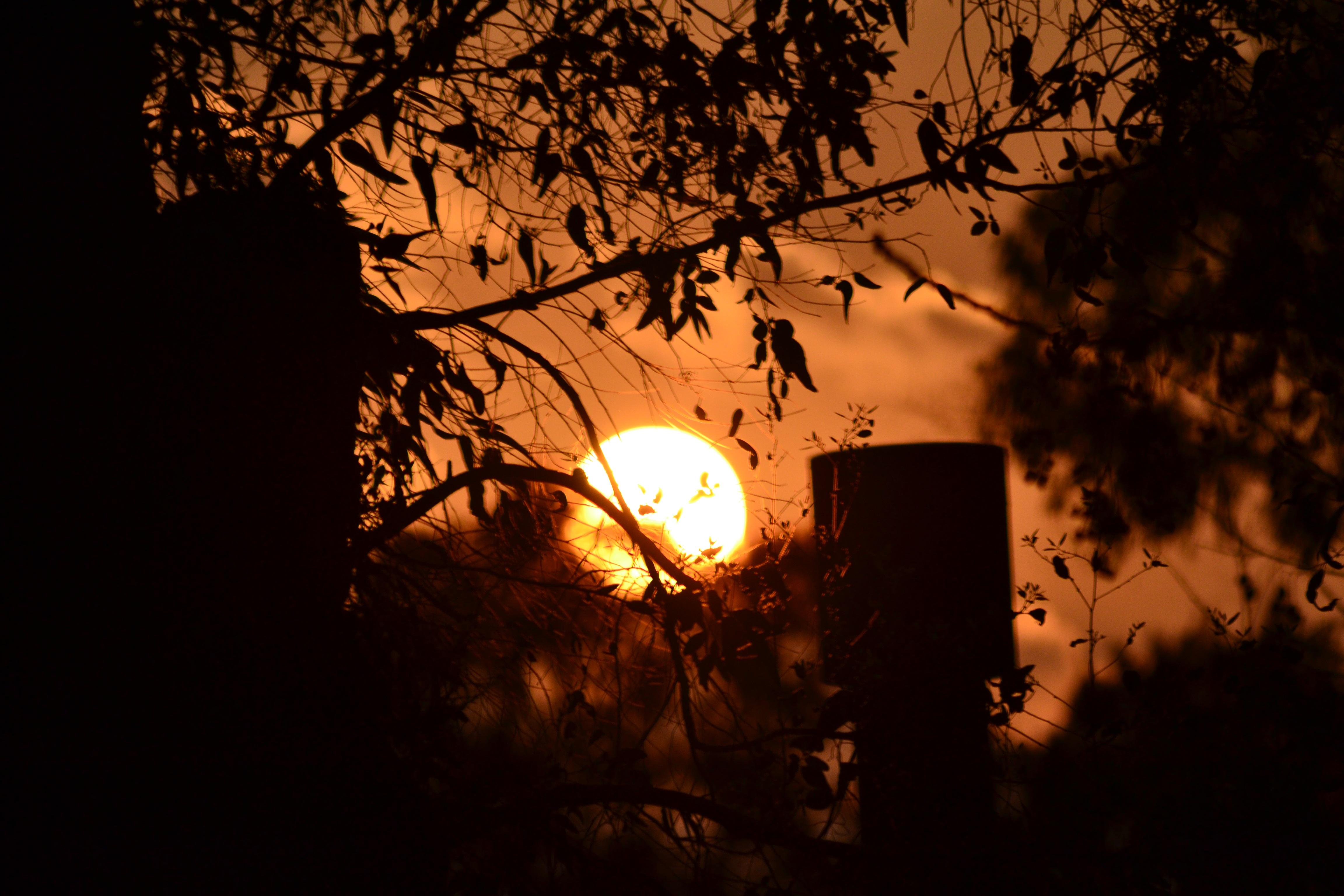 Gratis Afbeeldingen : boom, tak, licht, zonsondergang, nacht ...
