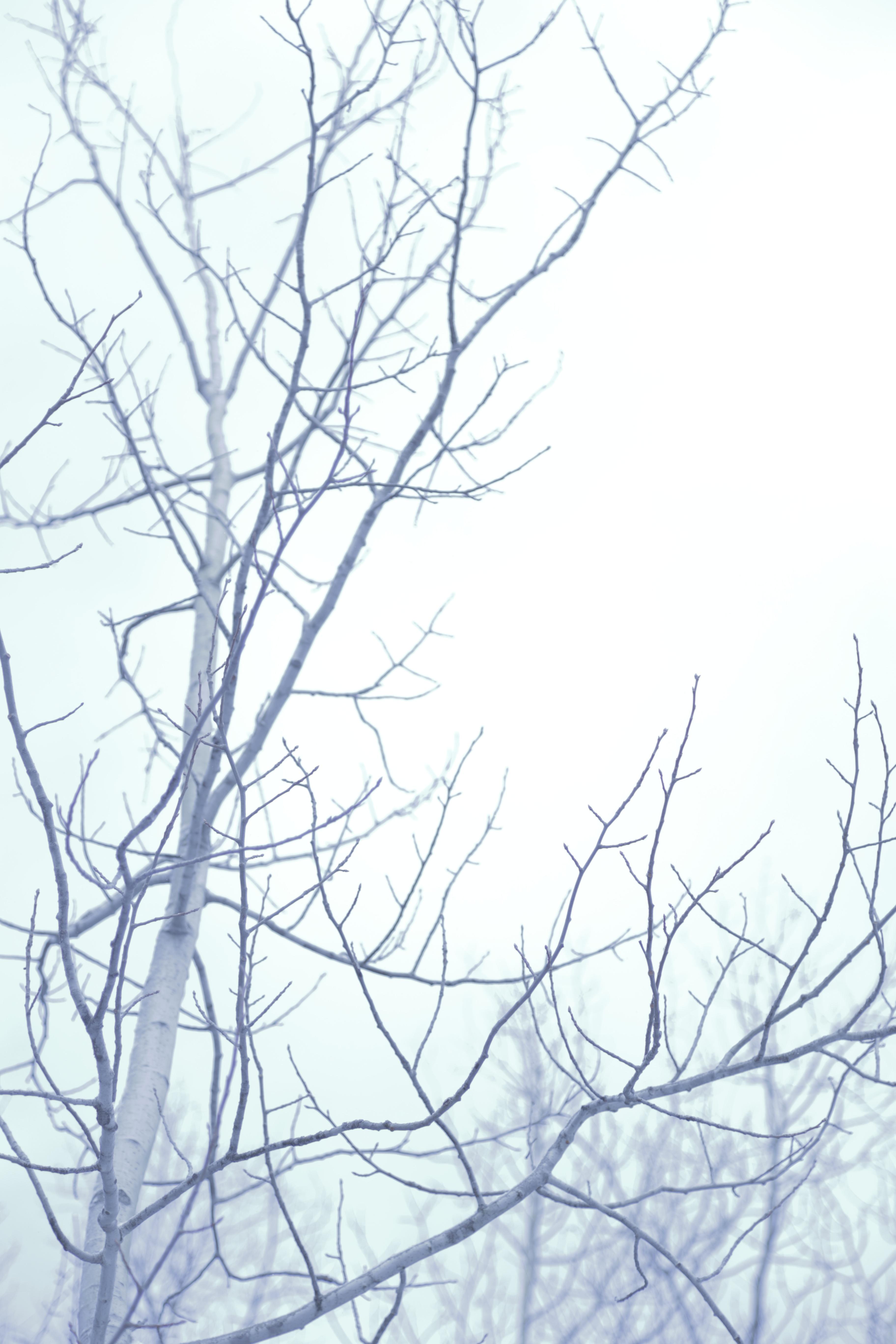Gambar Pohon Cabang Ranting Sketsa Gambar Garis Seni