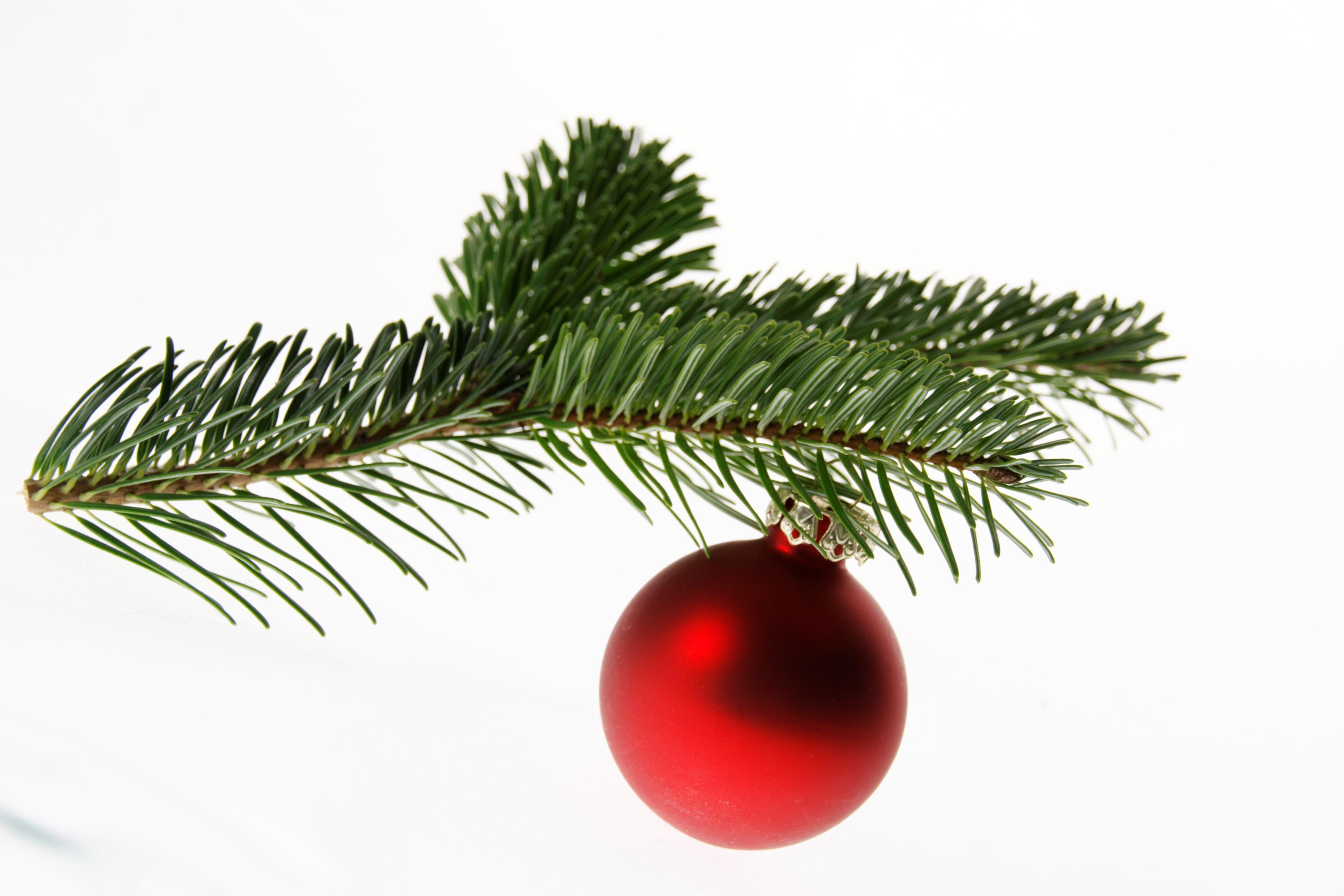 Картинка ветка елки с шарами