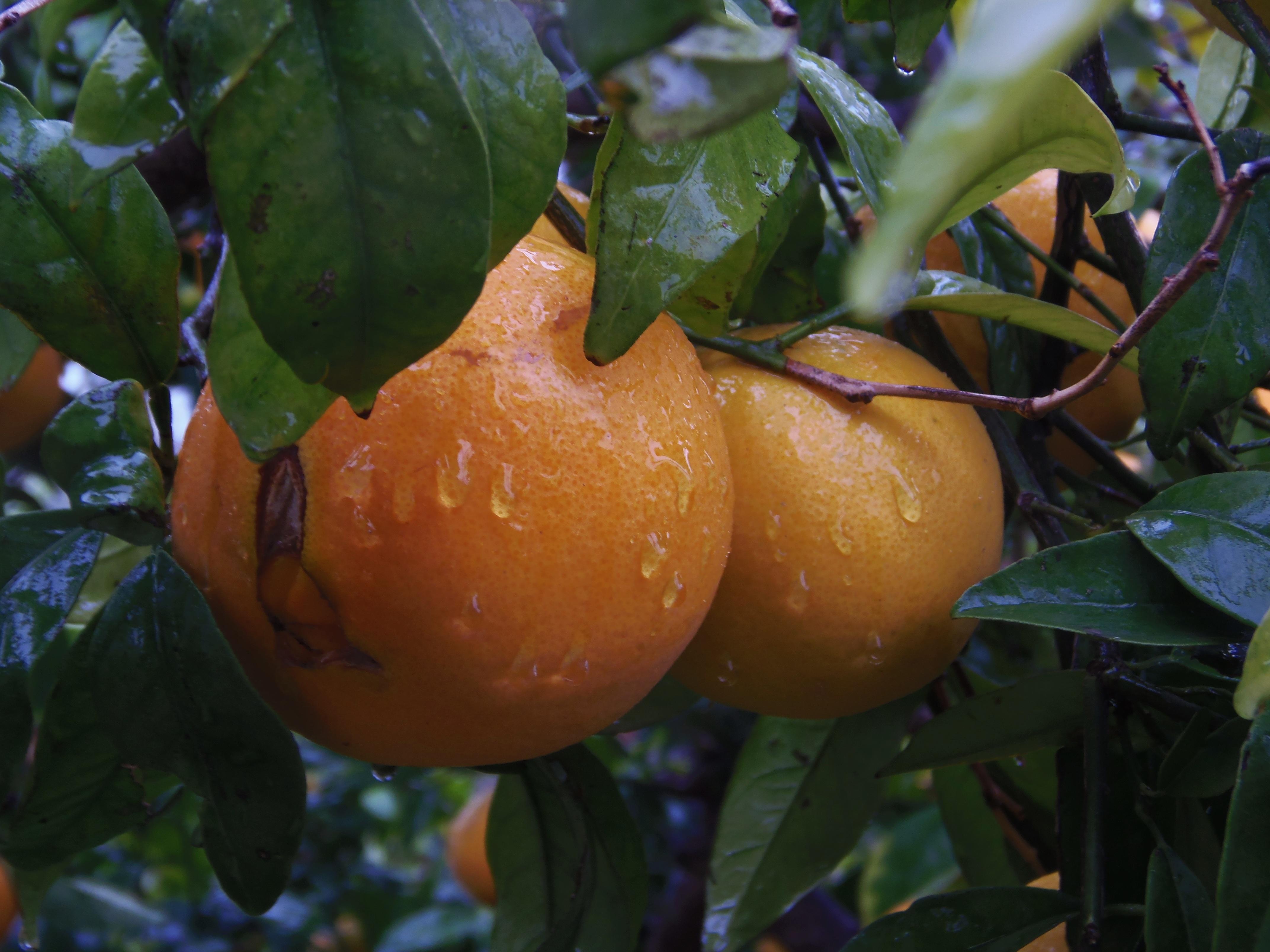 bittere Früchte und Gemüse