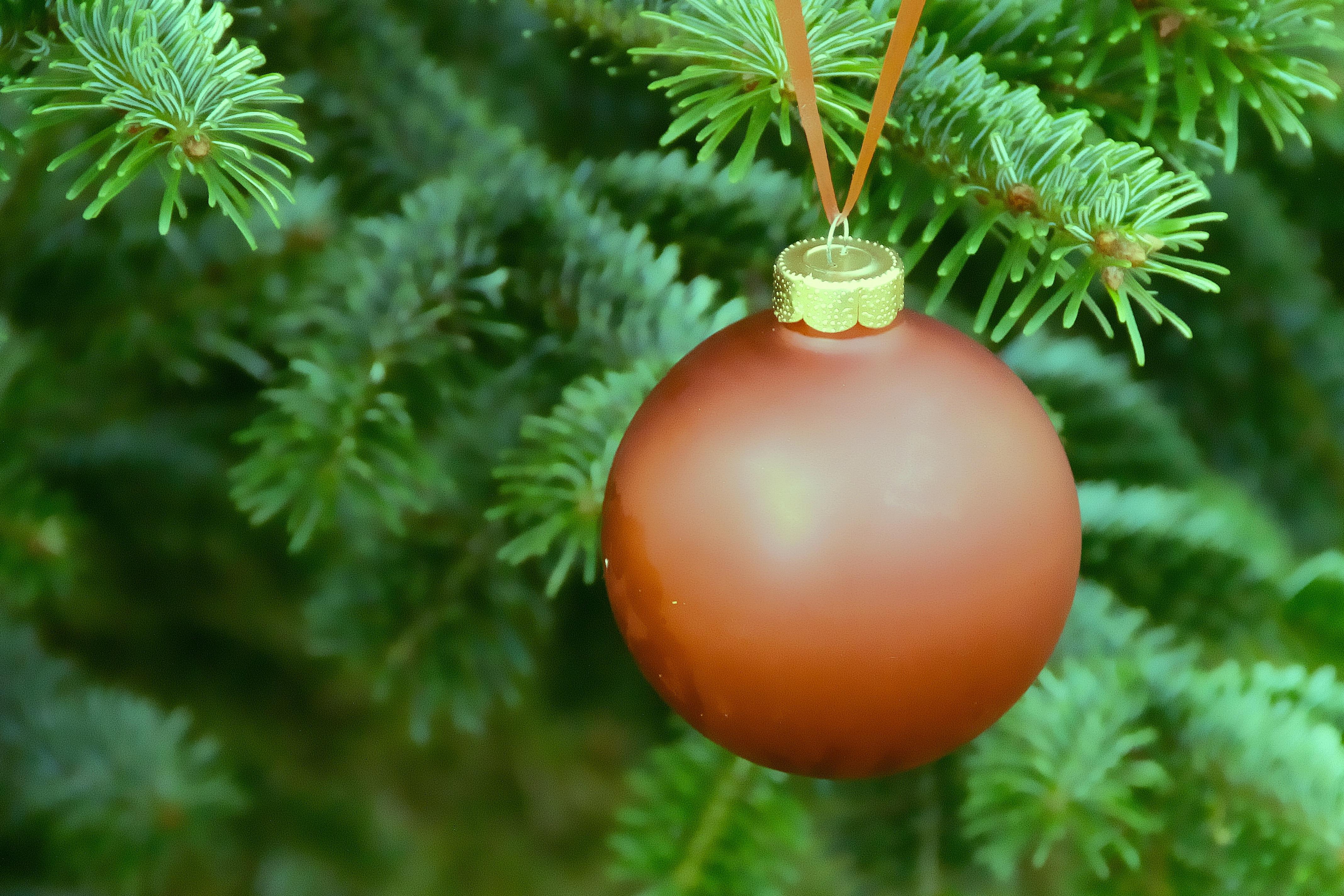 Fotos gratis rama planta flor abeto rbol de Navidad