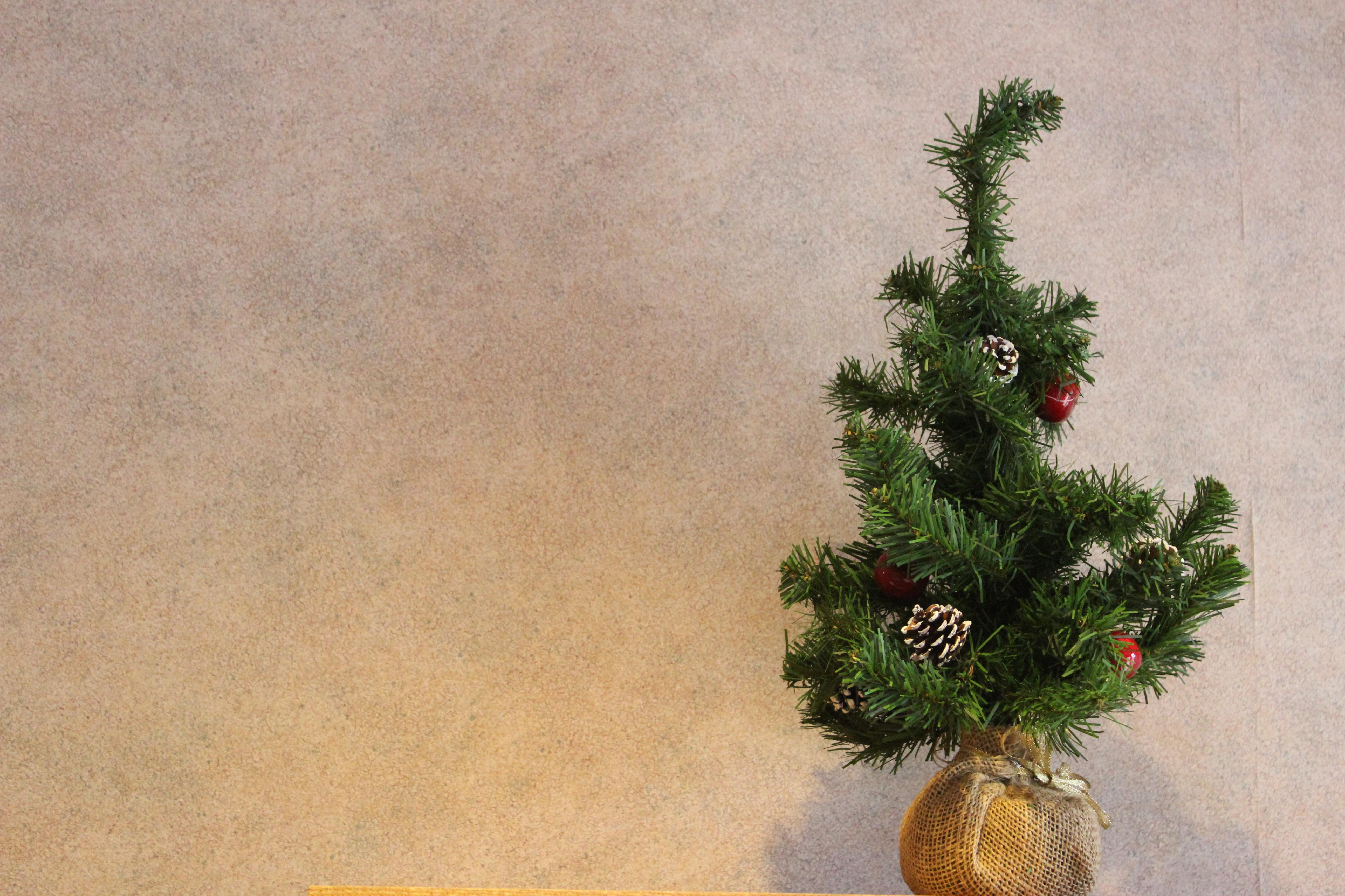 Fotoğraf Ağaç şube Bitki çiçek Noel Ağacı Boyama Dal