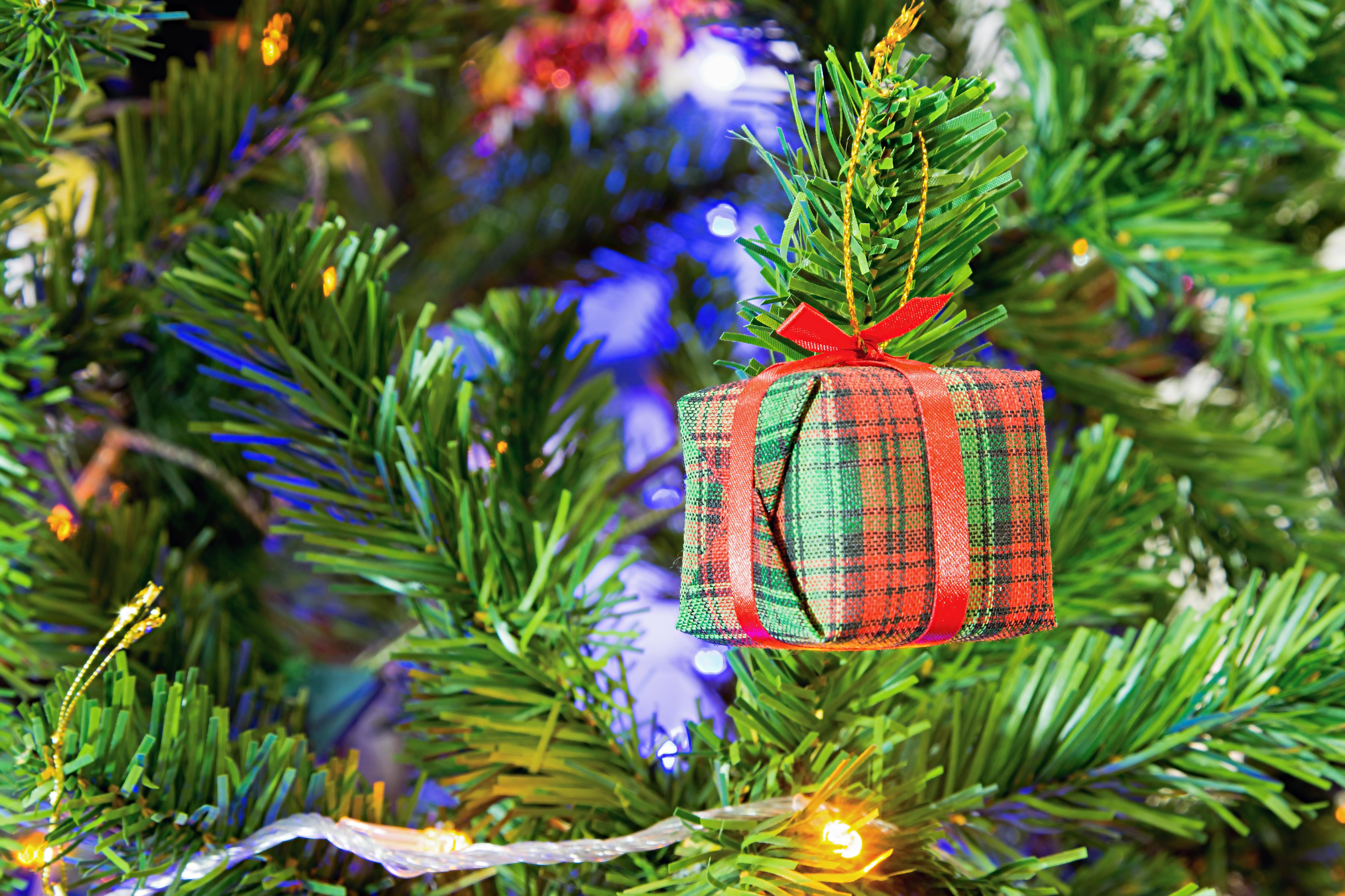 Free Images : branch, flower, gift, green, holiday, garden, fir ...