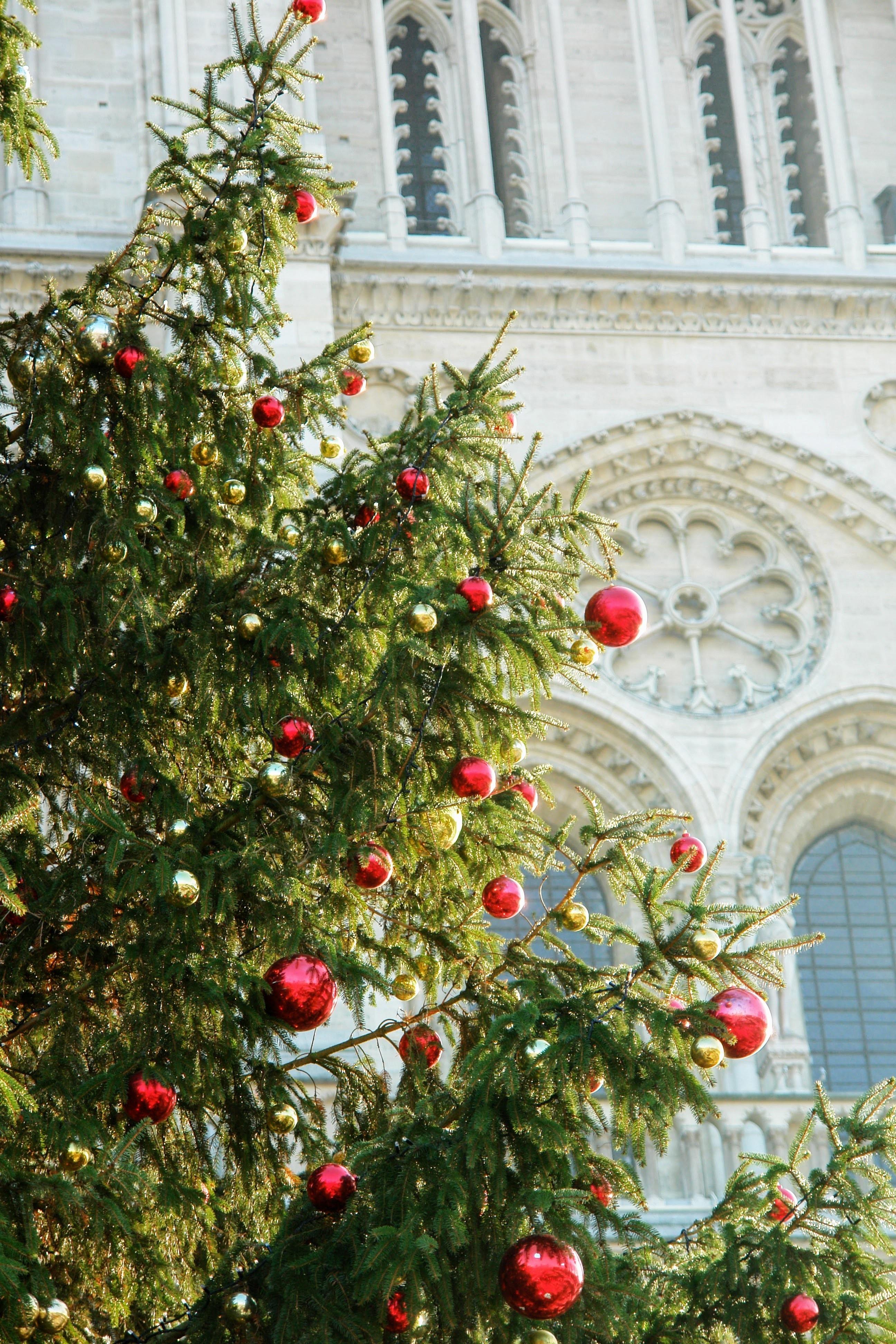 Bildet Tre Gren Anlegg Blomst Paris Frankrike Kirke Juletre Jul Dekorasjon Detalj Woody Plante Vest Rose 2592x3888 1207619 Bilder Gratis Pxhere
